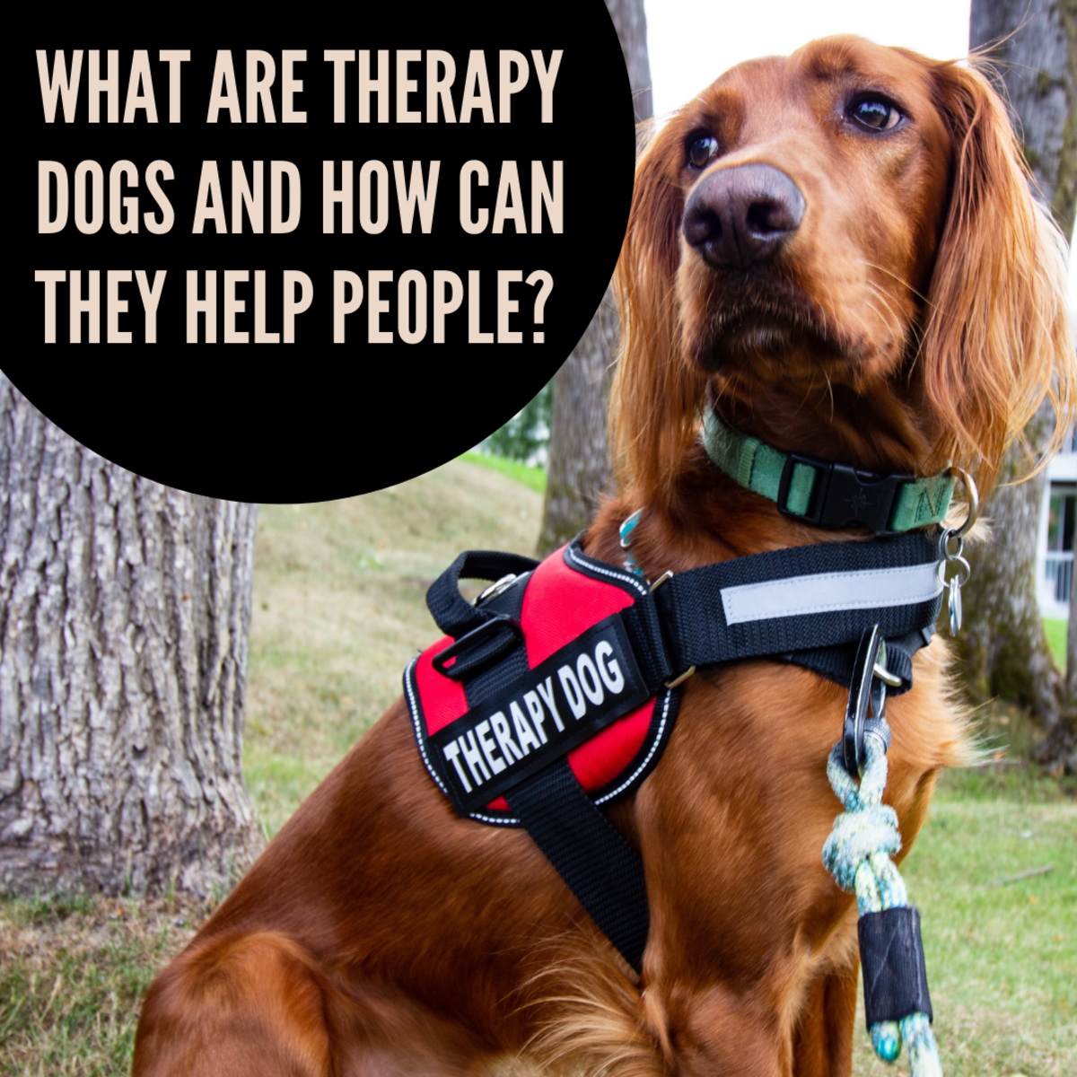 Therapy Dogs: How They Provide a Helping Paw