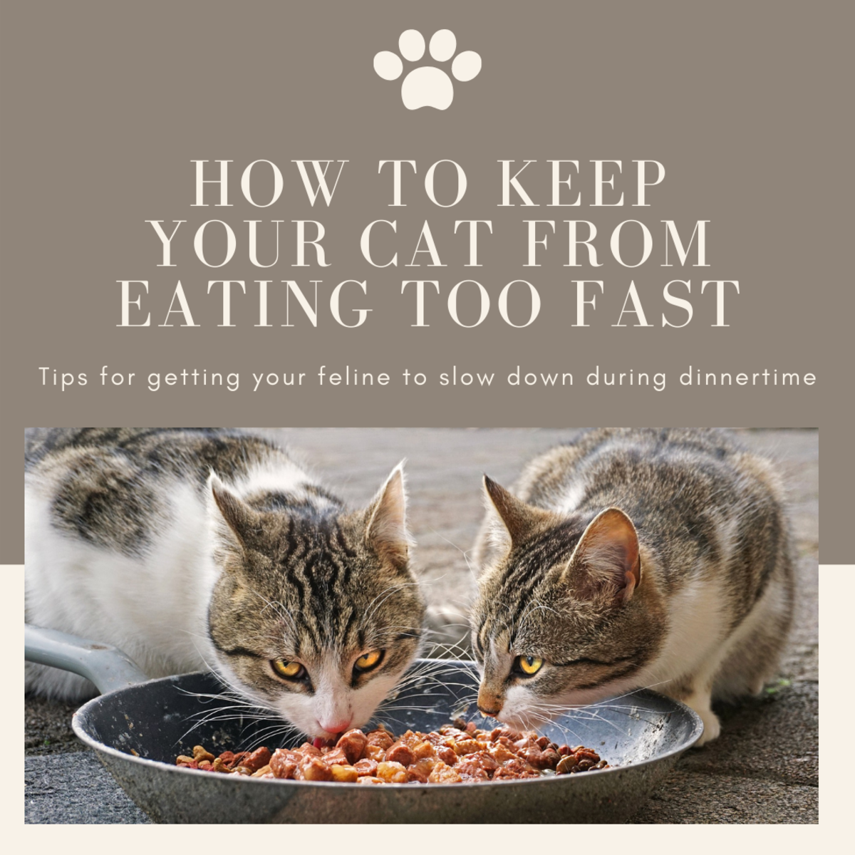 This article will provide some tips and tricks for how to get your cat to not eat so fast during mealtimes.