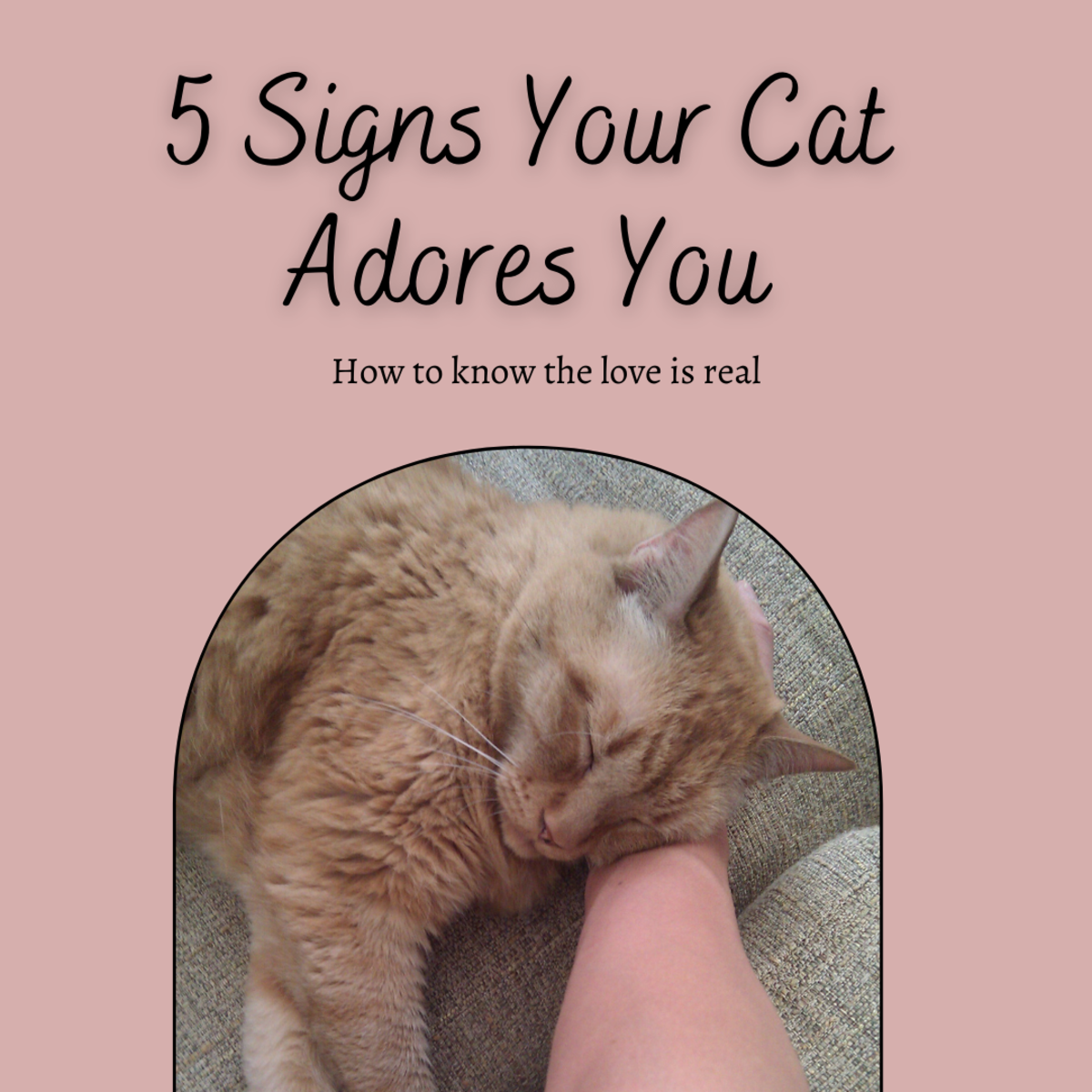 Five Signs That Your Cat Adores You
