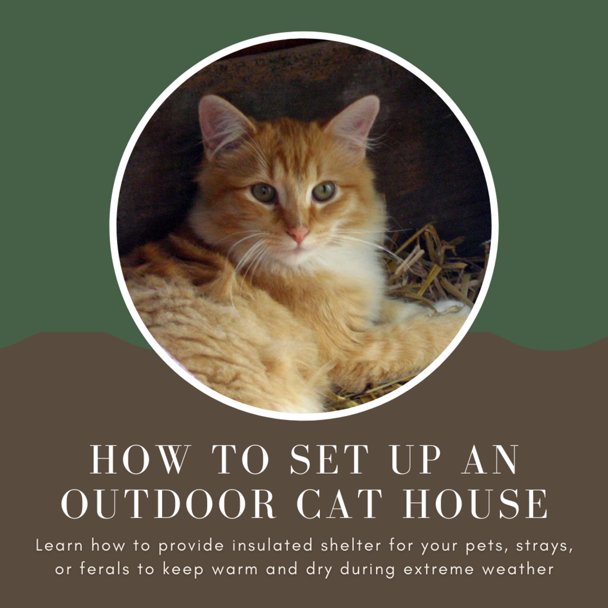 How to Set Up an Outdoor Cat House for Pets, Strays, and Ferals