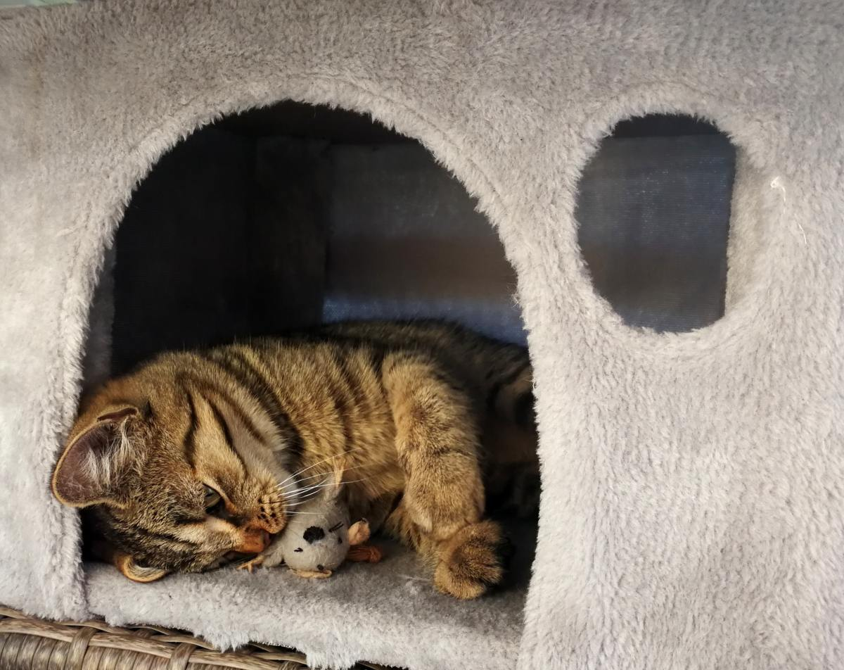 Setting up an outdoor cat house for the cats in your life can greatly increase their quality of life and potentially help avert a health disaster.
