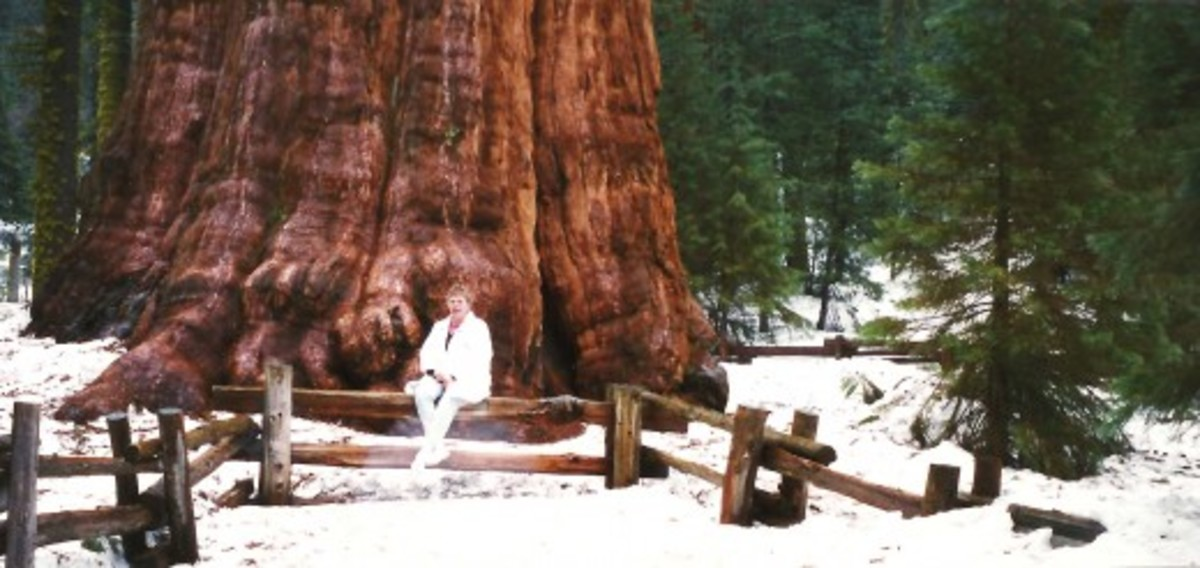 There I am seated in front of the General Sherman tree.