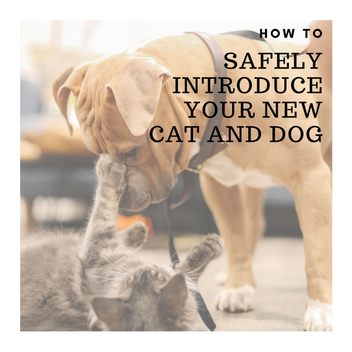 It is possible for your cat and new puppy to meet and get along.
