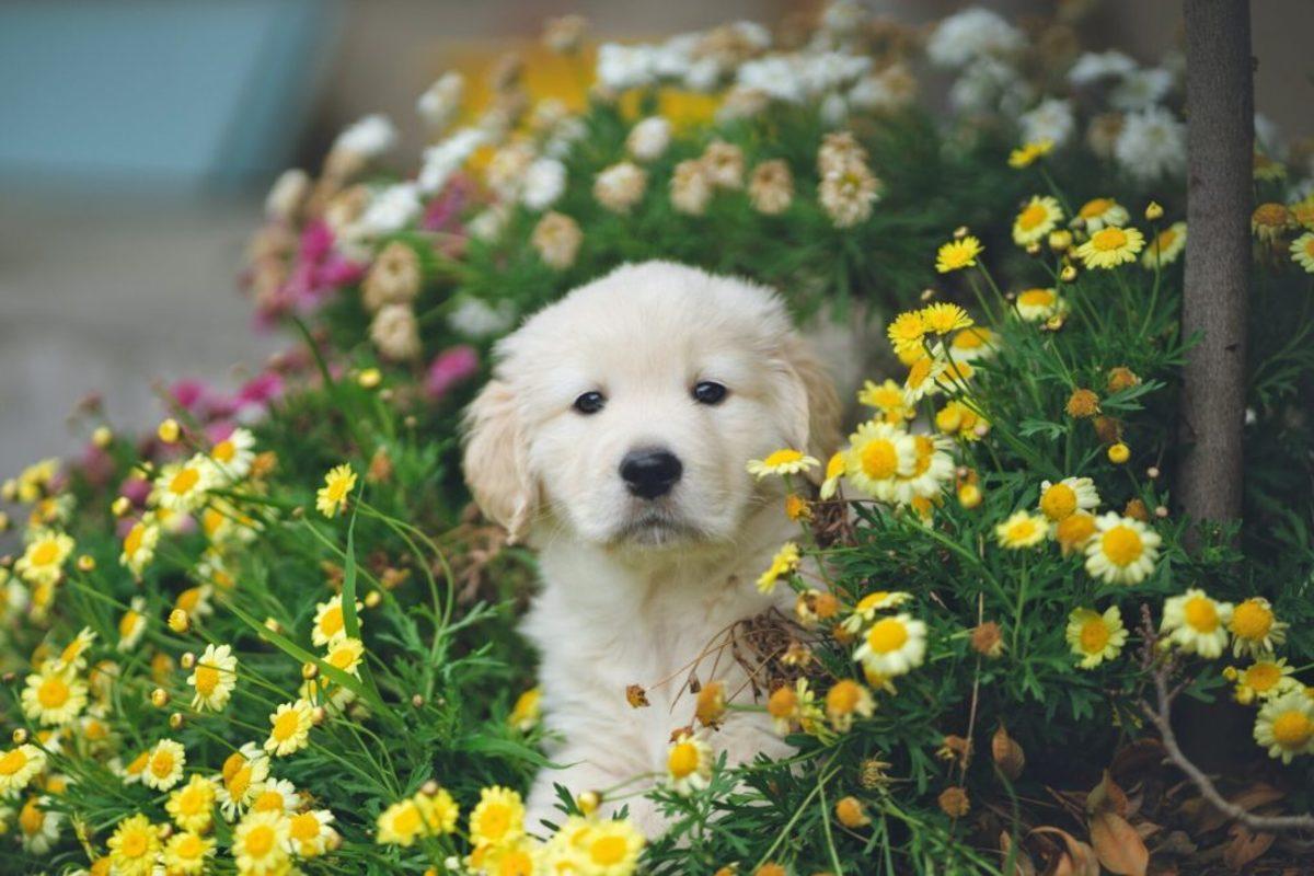 girl-dog-name