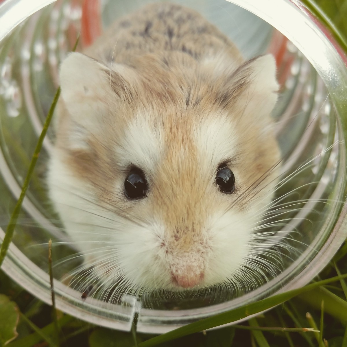 How Do Hamsters Communicate With Each Other and With Humans?