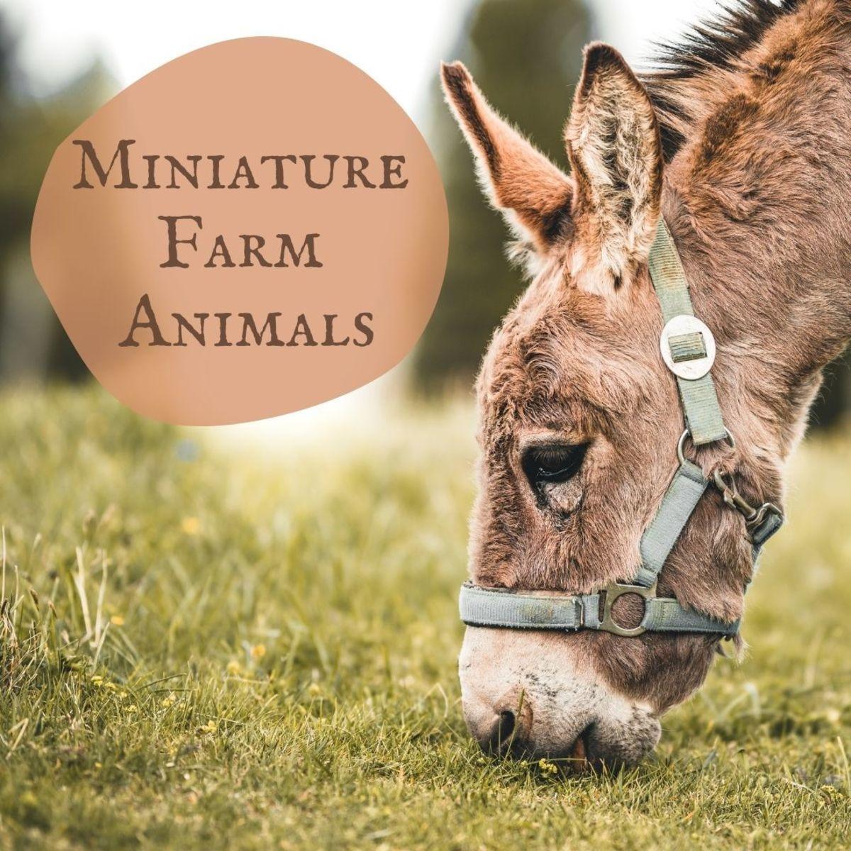 Miniature Farm Animals: A Guide to Miniature or Small Livestock