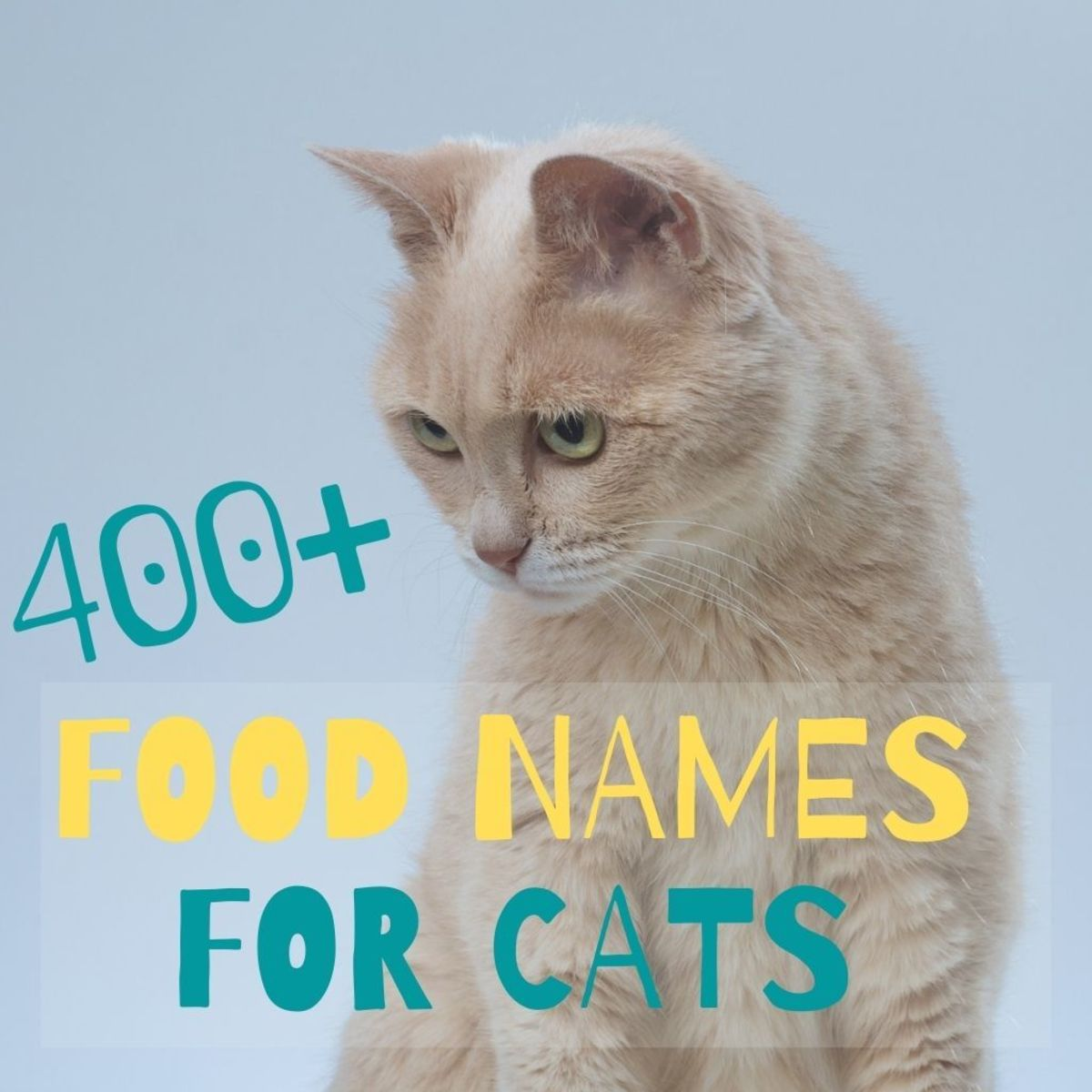 400 Perfect Food Inspired Names for Cats