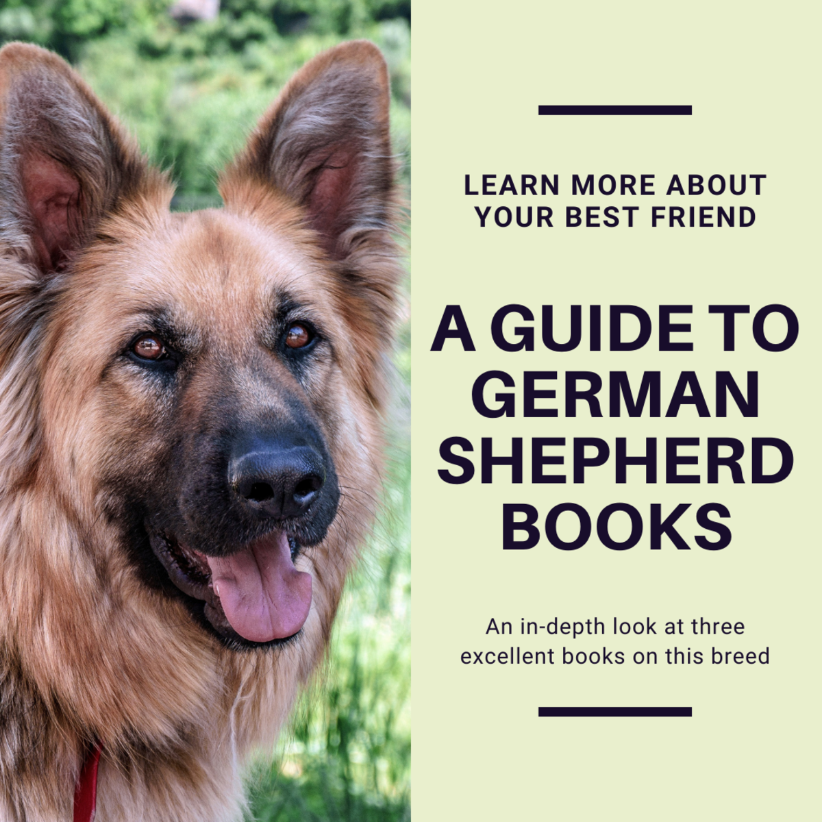 Learn more about your best friend with these books.