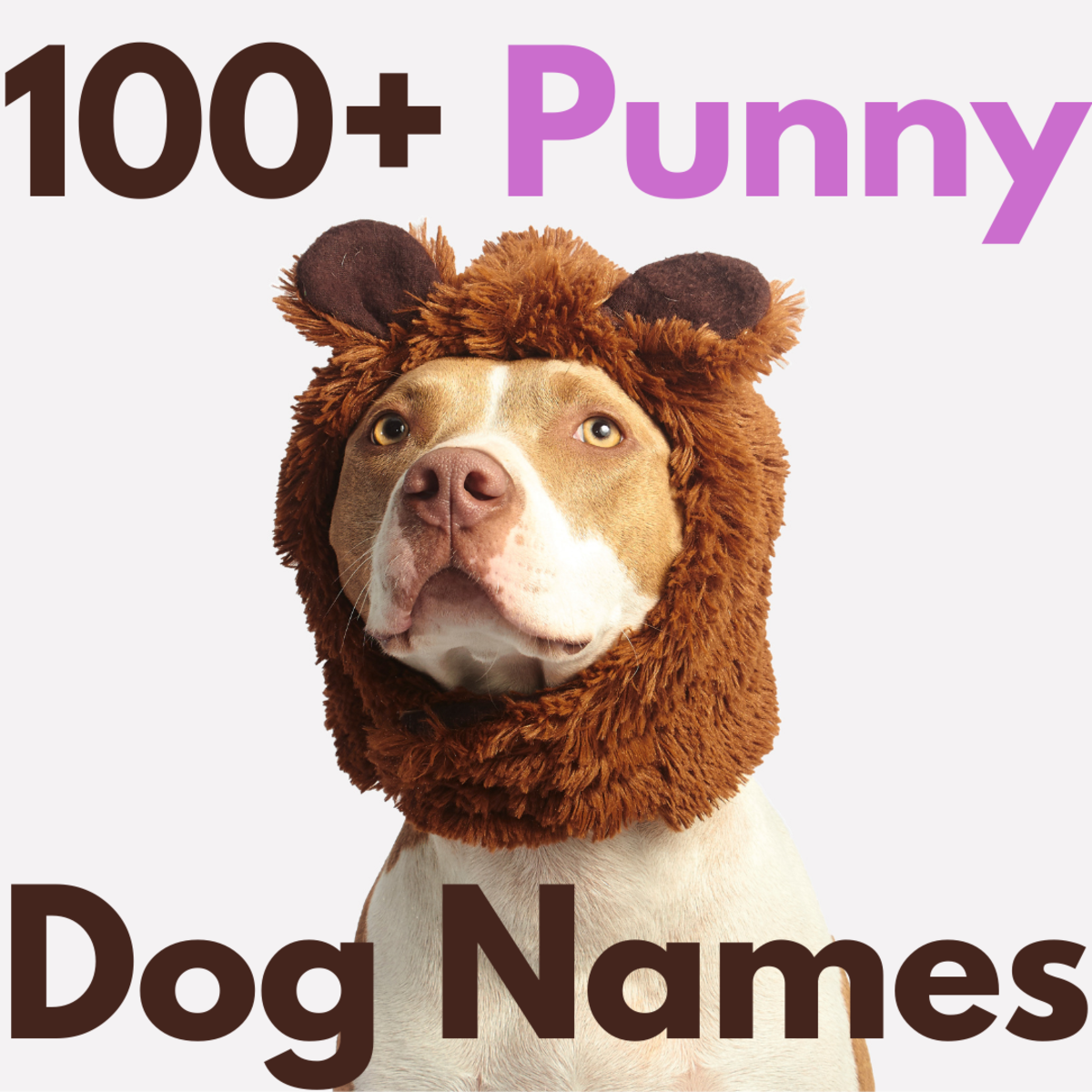 Find a name for your pet that'll make everyone smile.