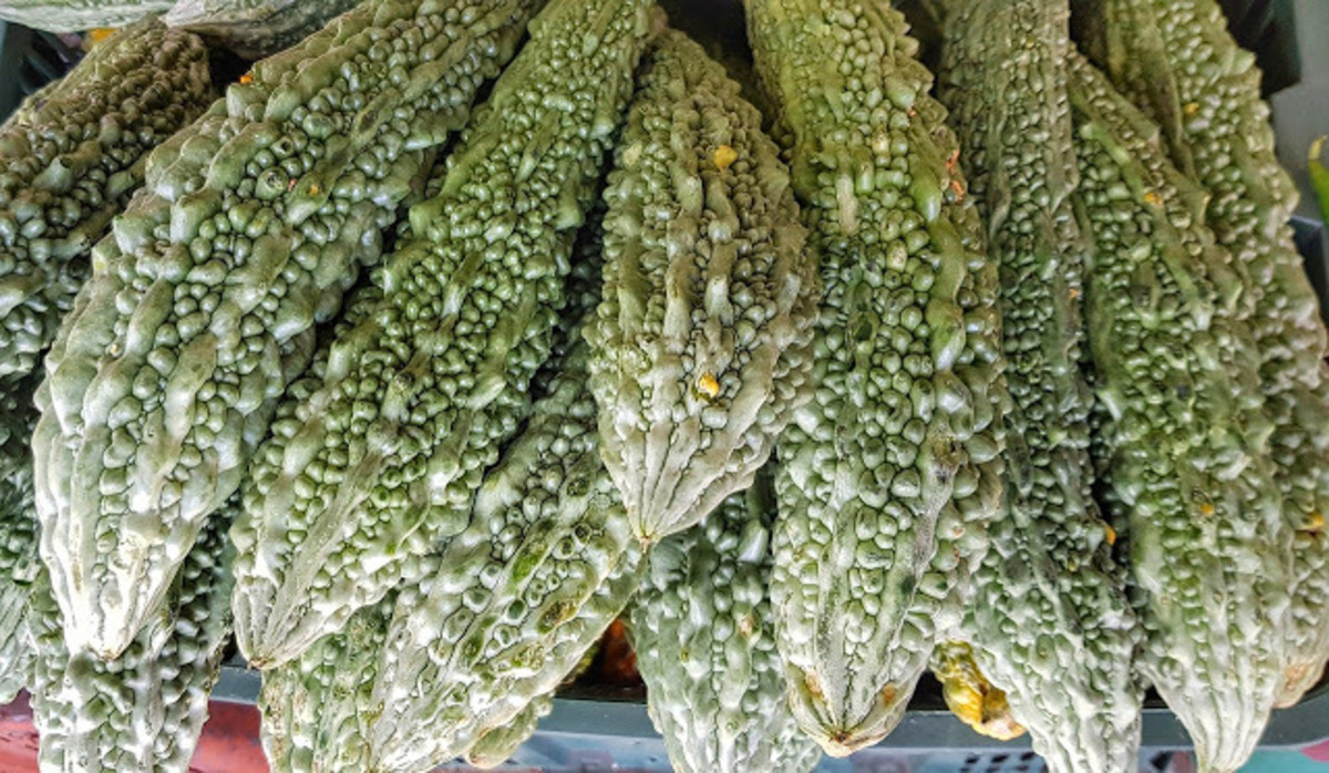 Strengthen Your Immune System with Ampalaya or Bitter Melon
