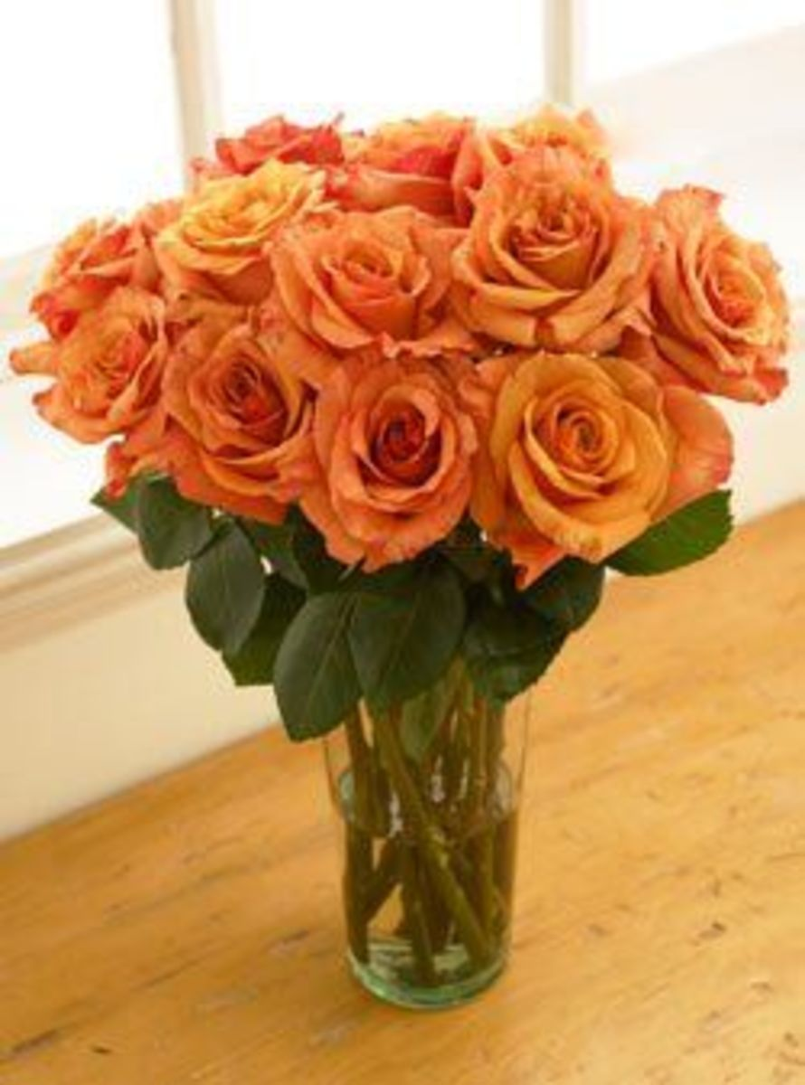 Rose colors and meanings hubpages for The meaning of orange roses