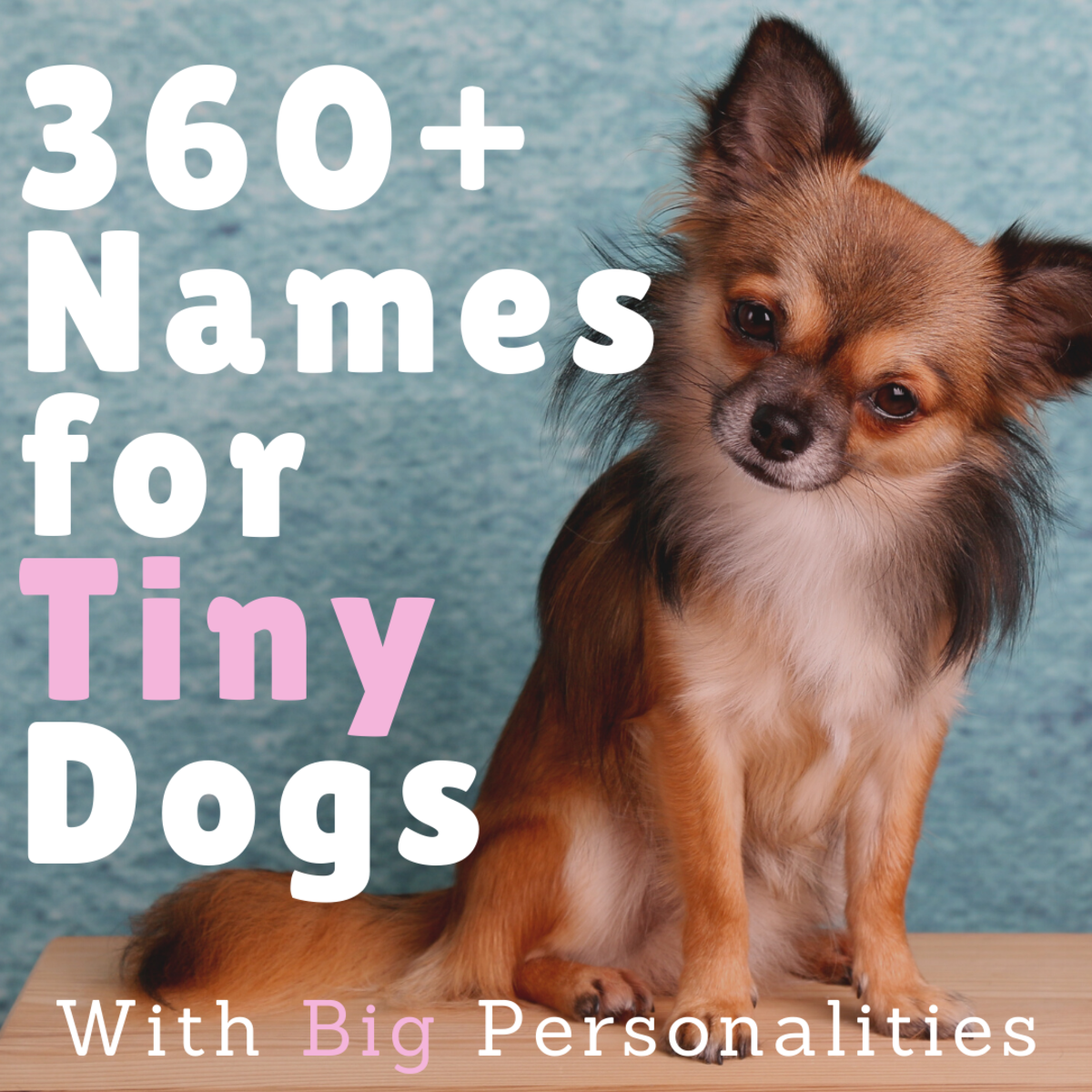 Find just the right name for your little buddy.