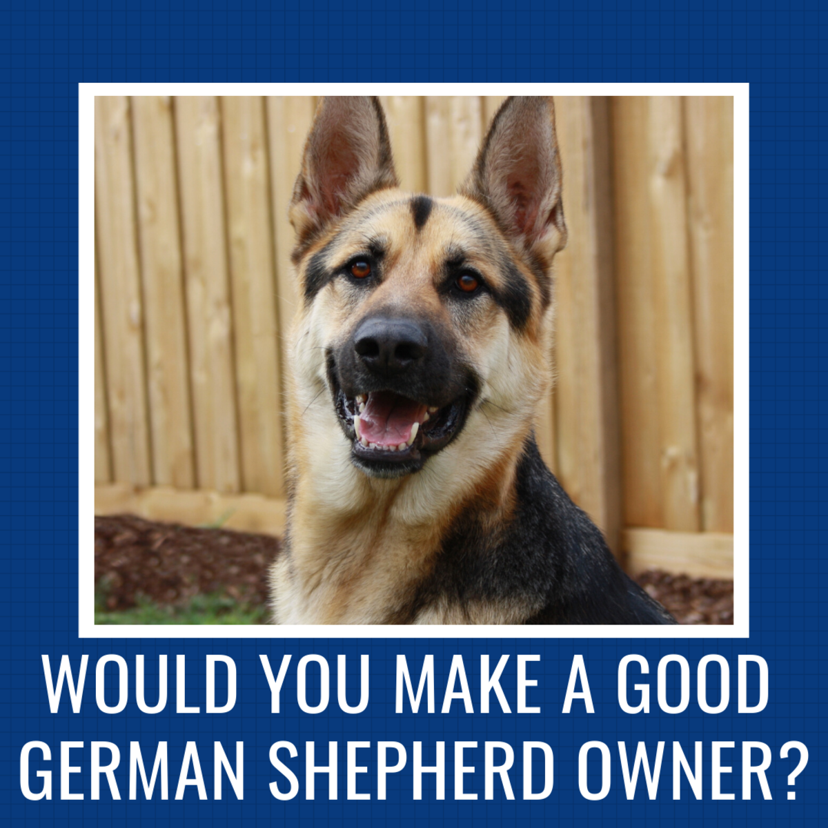 Find out if this breed is the right match for you.