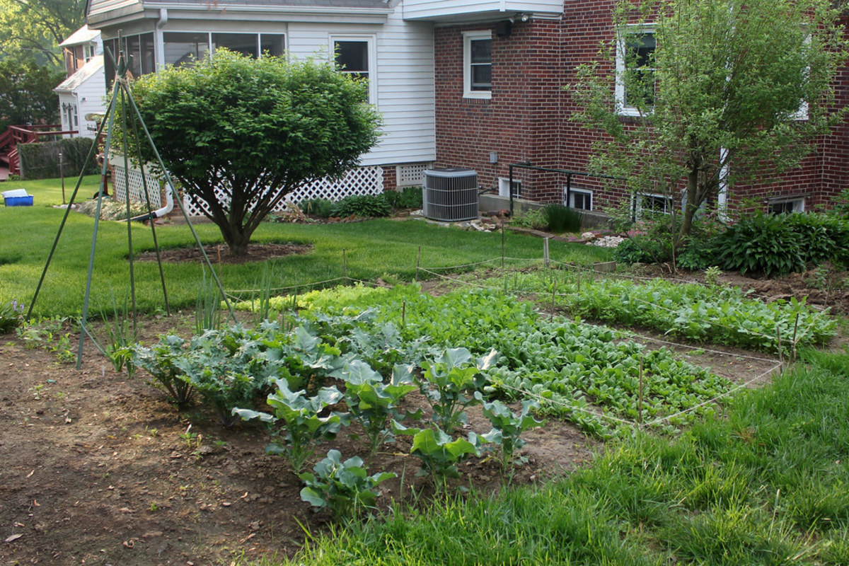 Stock Investing and Trading: Tending the Garden