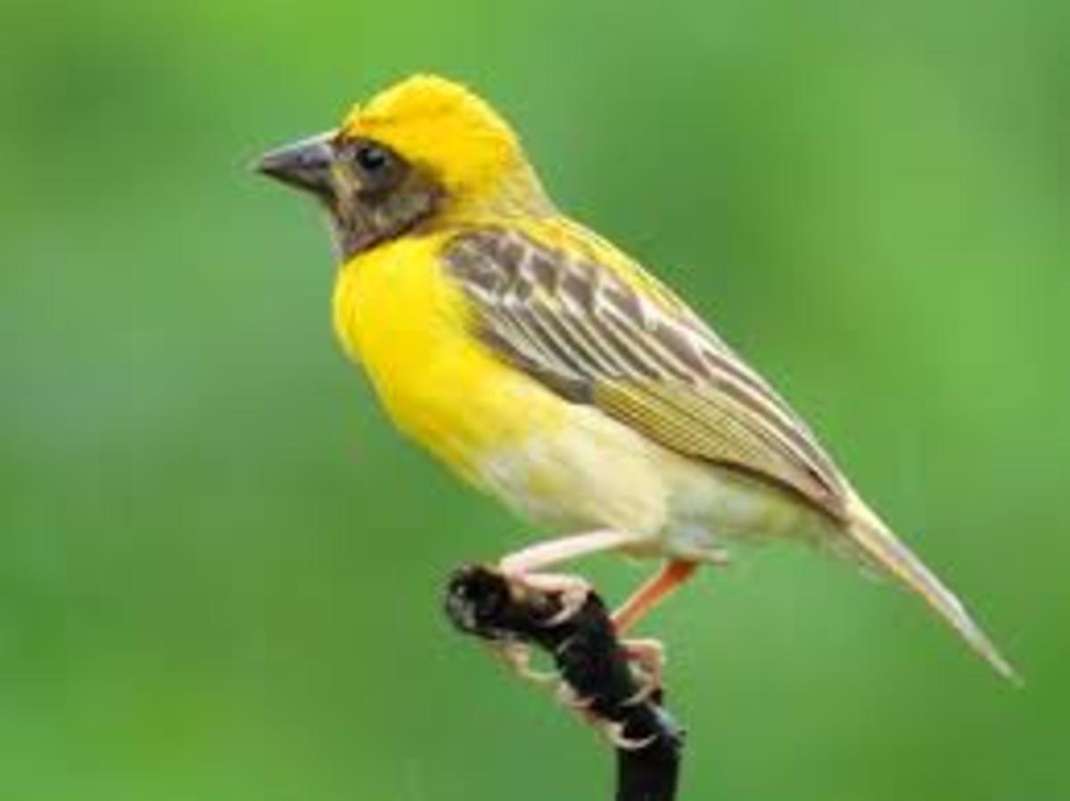 beak-and-food