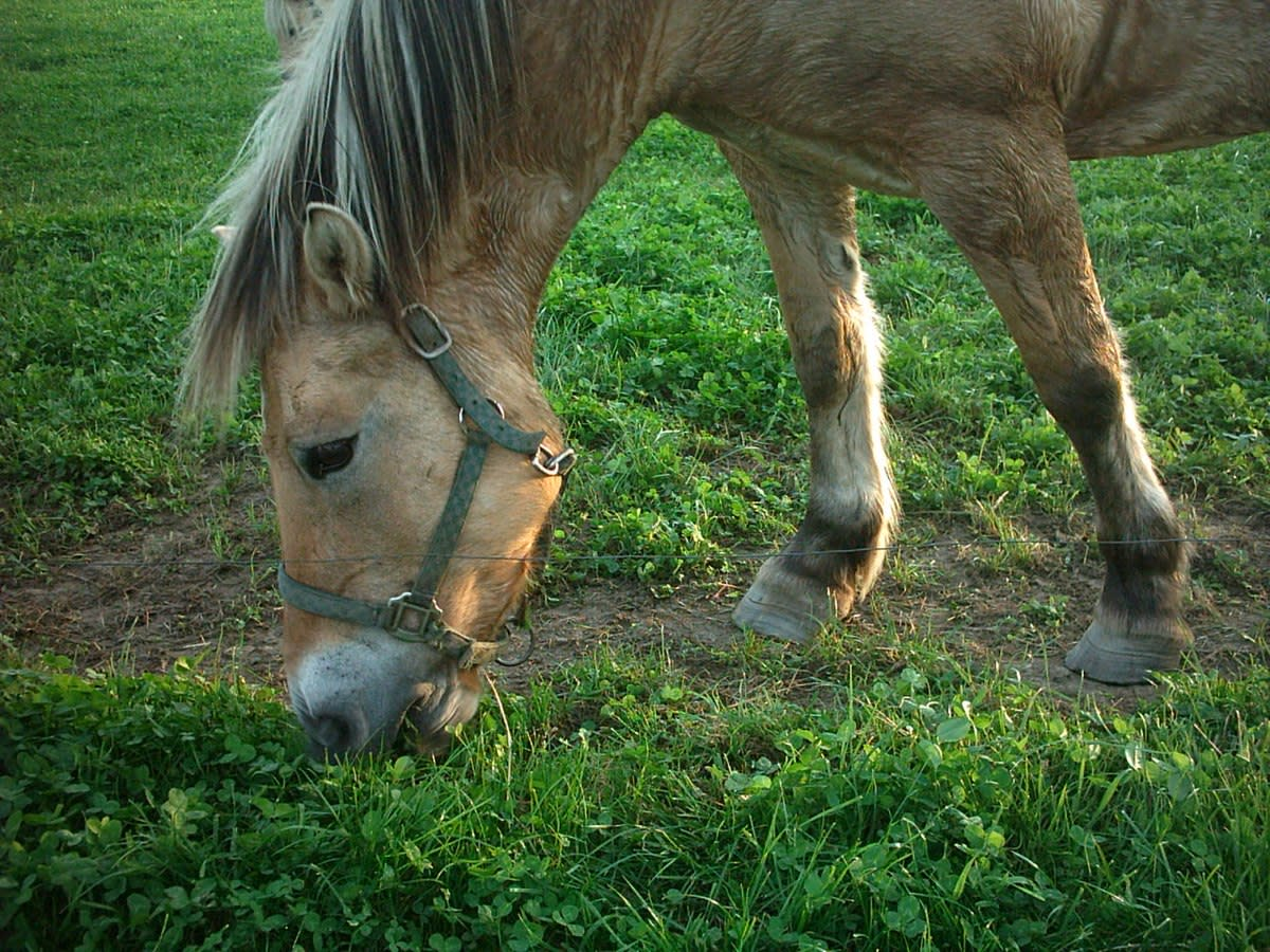 Horses and other livestock can suffer severe injury from broken glass in grass.