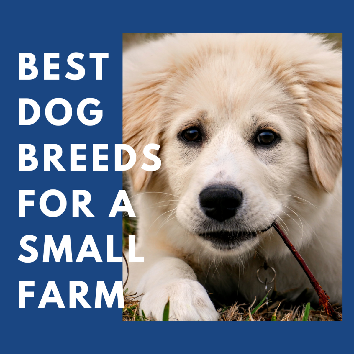 Several dog breeds are great on small farms.