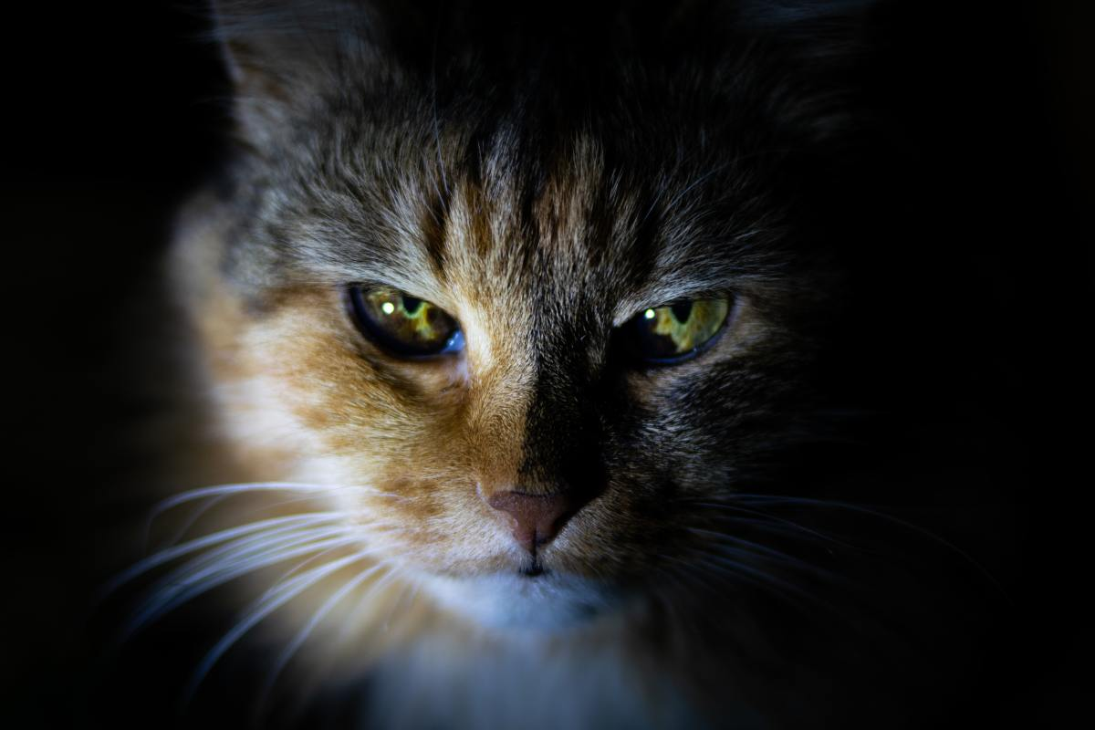 Fierce Names for Cats with Fiery Yellow Eyes