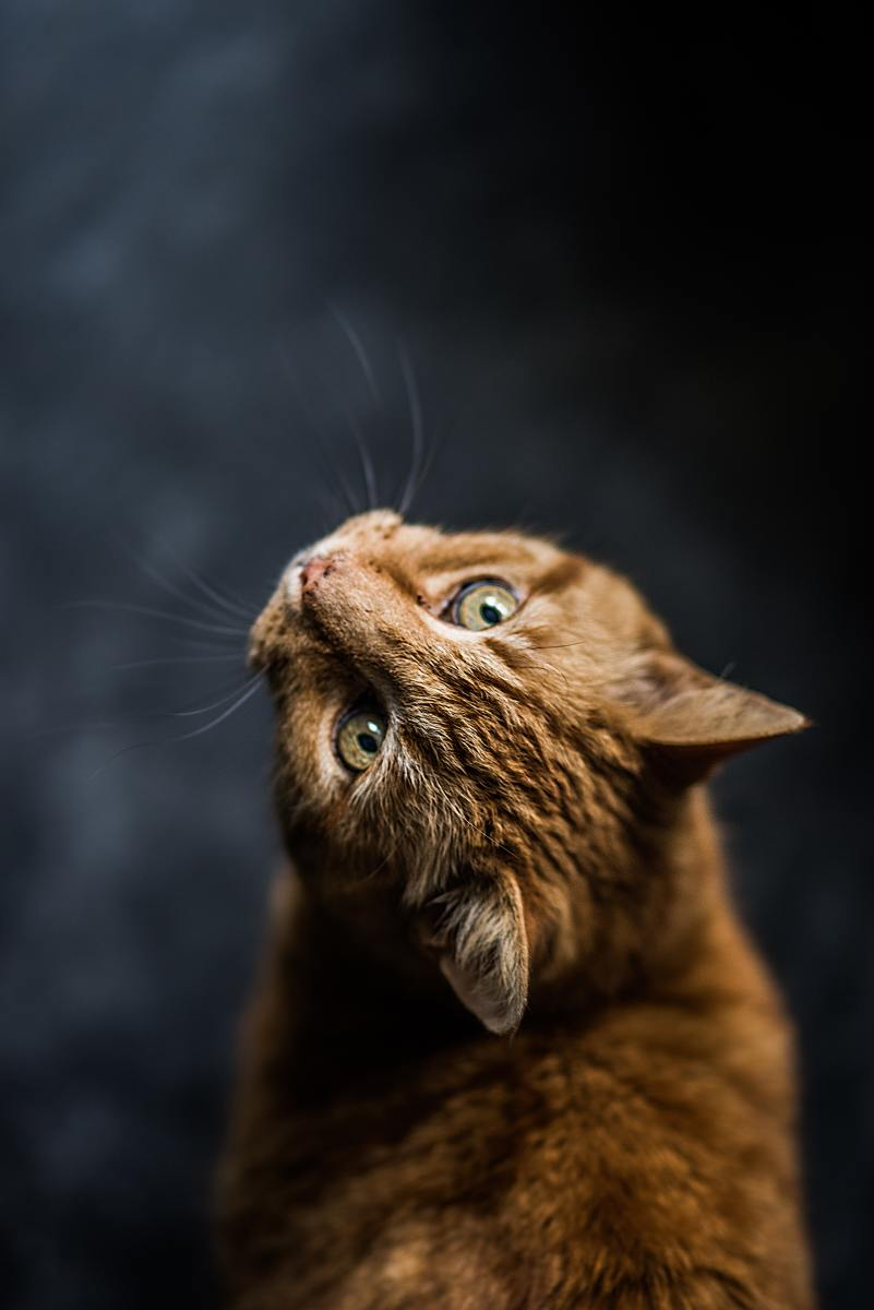 Names for red cats with orange eyes.
