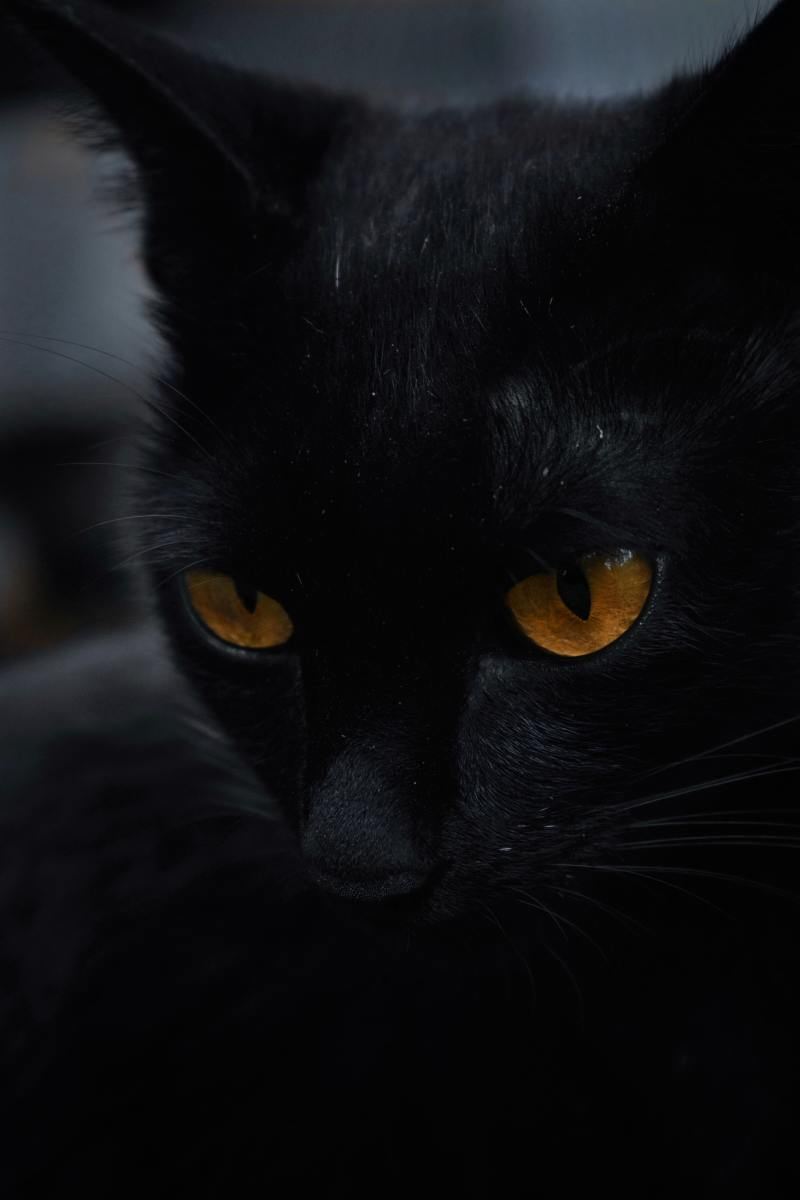 Unique names for black cats with amber eyes.