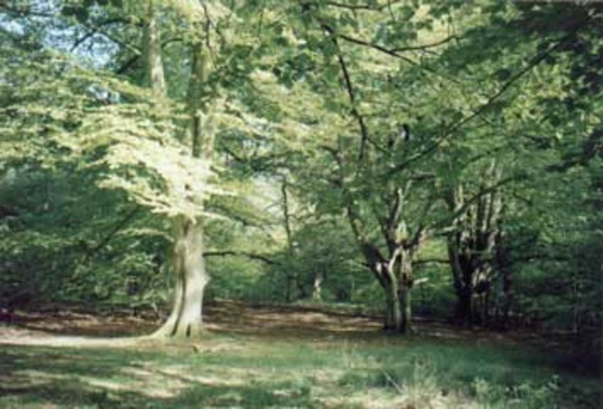 Almost as soon as Harold stepped into his father's shoes a dispute arose about hereditary rights in the Savernake Forest. Church and lay ownership were in contention
