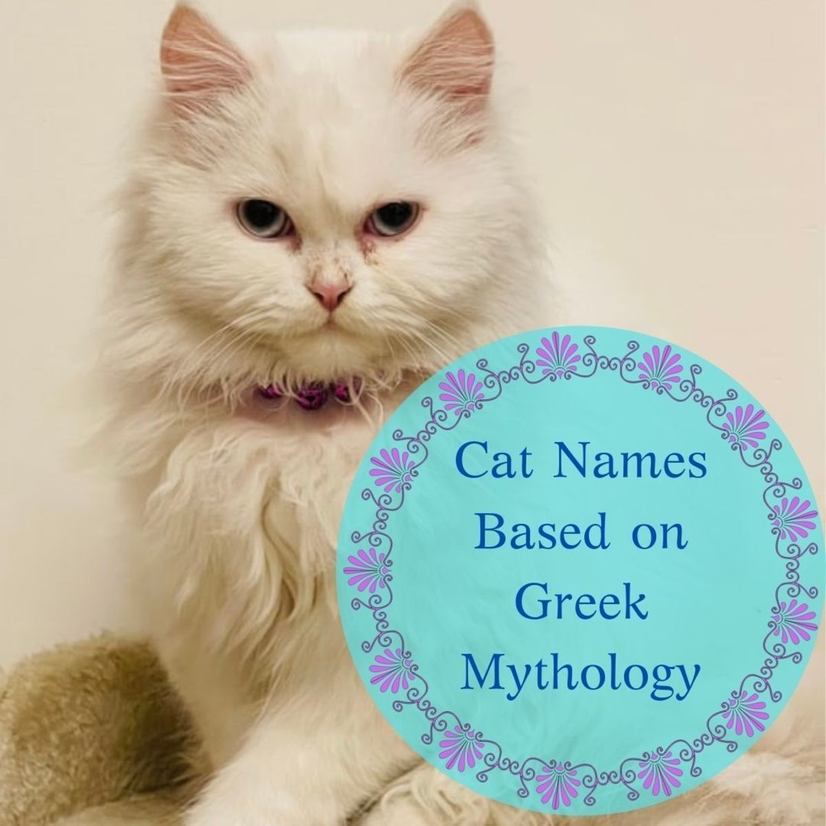 Mythology is a great place to turn to for cat names brimming with meaning, and offers everything from gods and goddesses, to nymphs and Titans to choose from.
