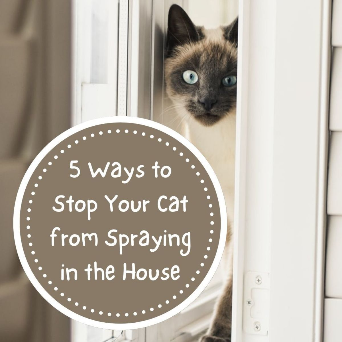 5 Ways to Stop a Cat From Spraying in the House