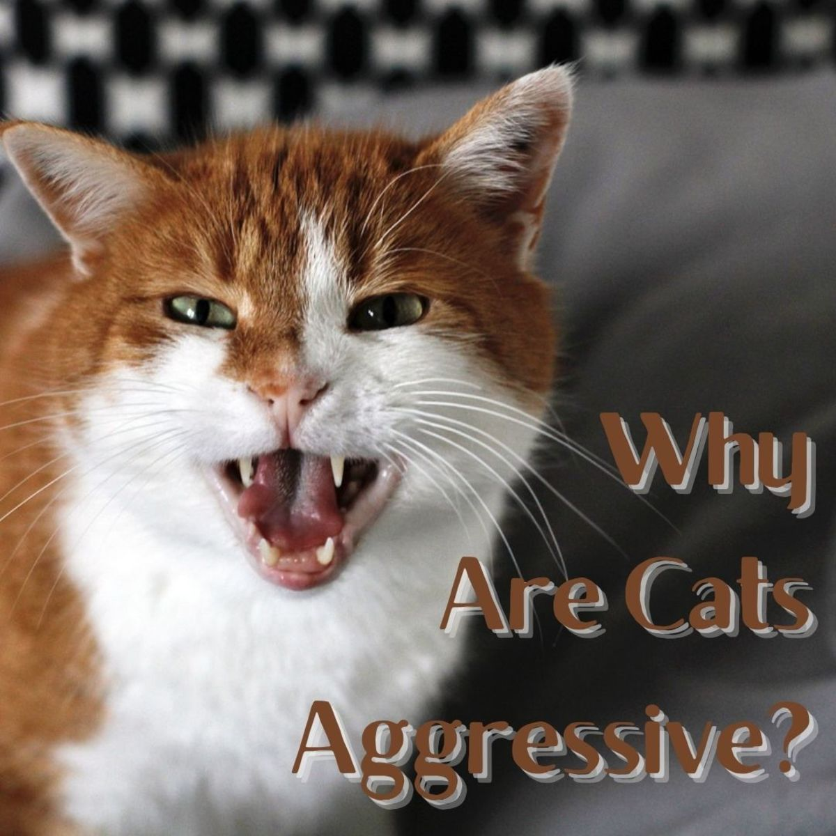 Living in a home with a cat that has behavioural problems can be a challenge.