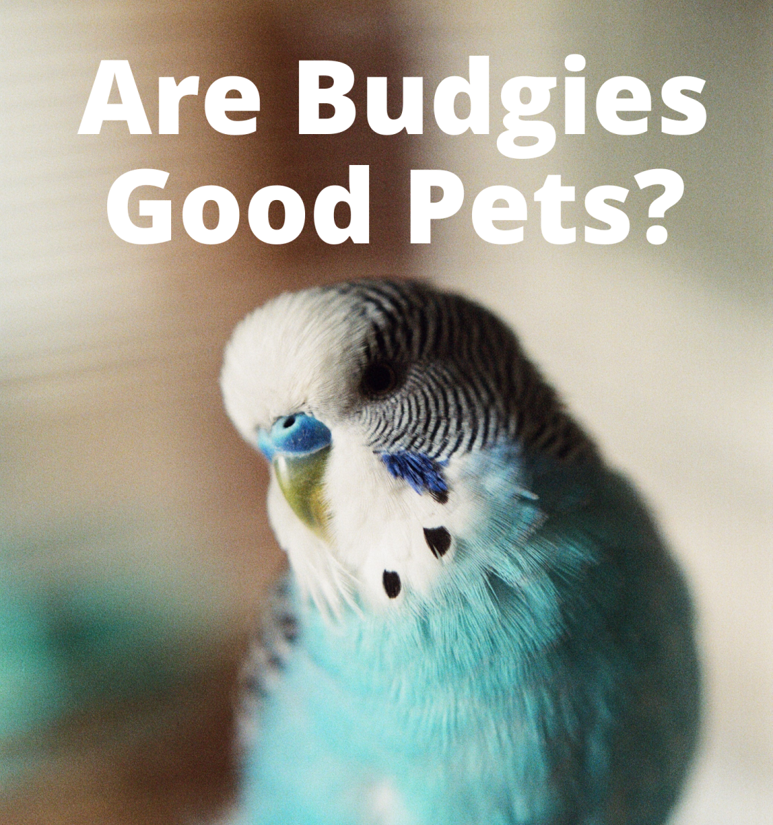 Is a Budgie the Right Pet for You?