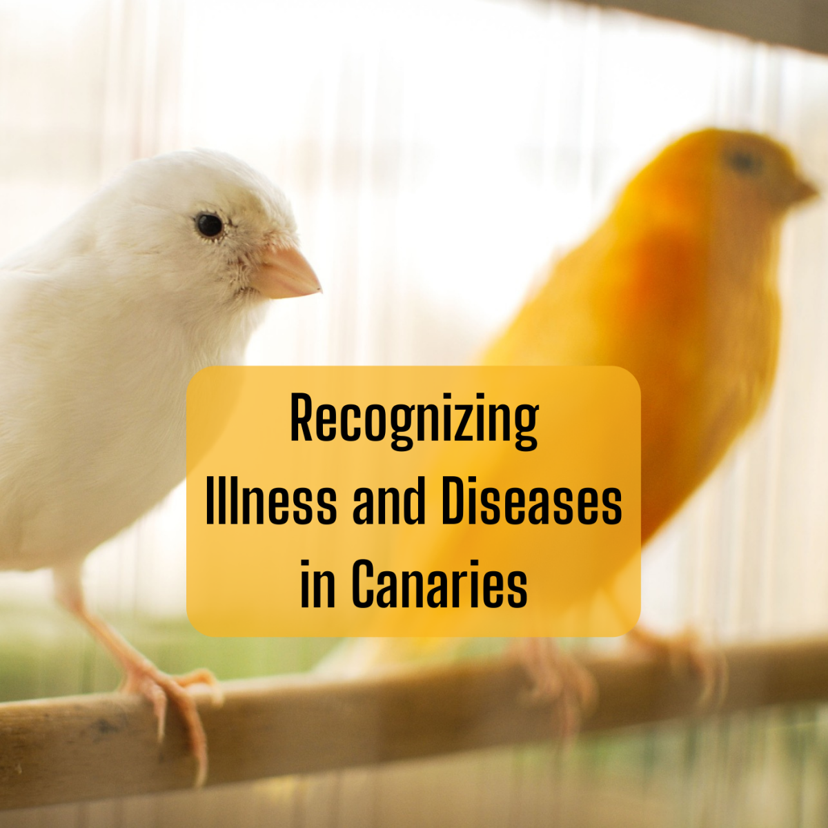 Learn about the main categories of disease in canaries and how to recognize the symptoms.