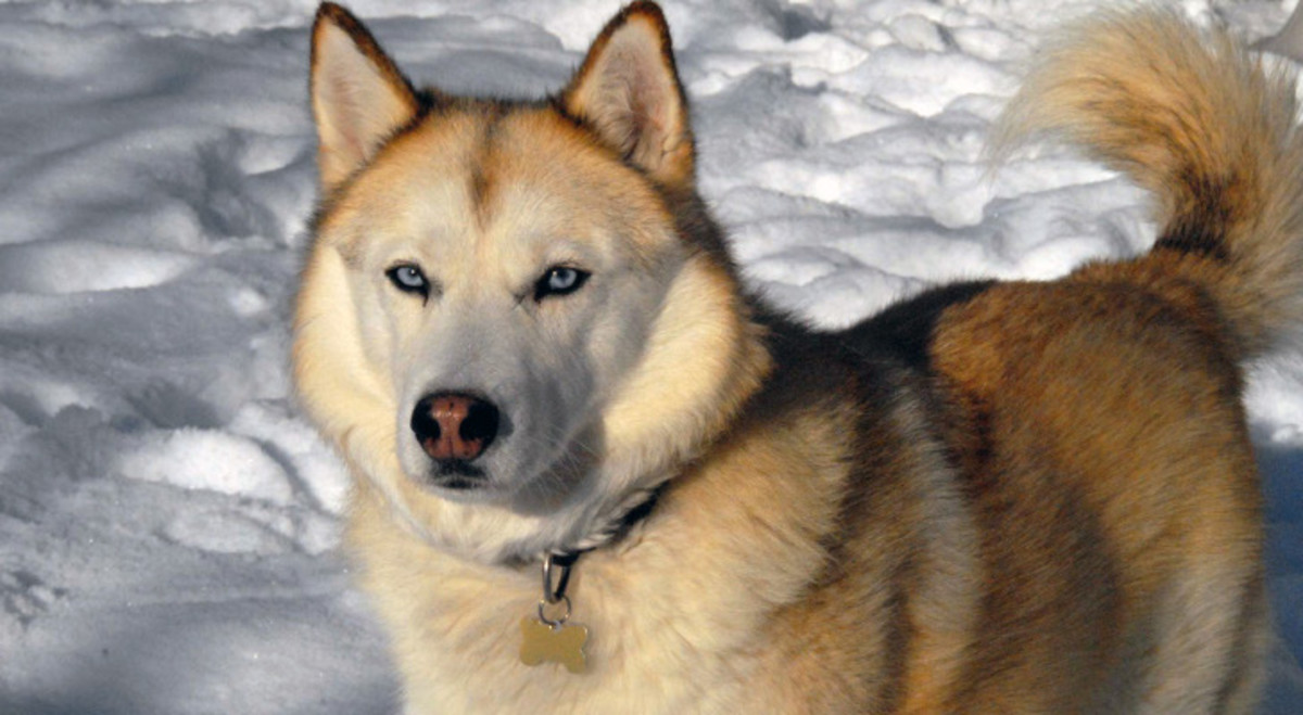 Heroic Dogs Amazing Feats Of Courage