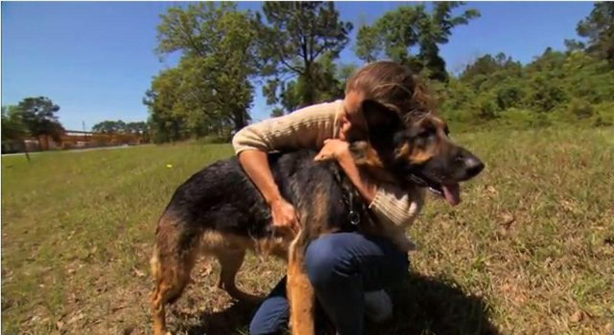 Top hero Dog named Hero!