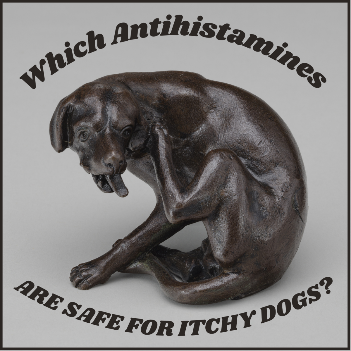 Allergy Pills That Can Help Your Itching Dog When You Cannot Visit the Vet