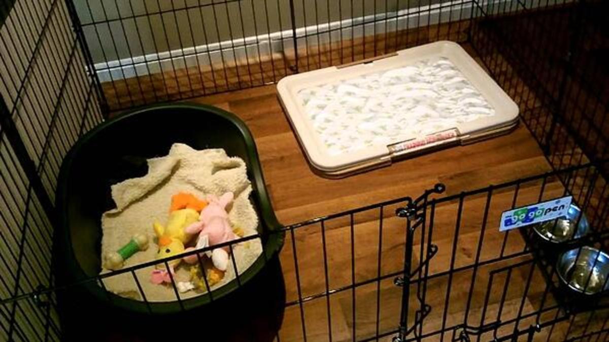 Great Puppy Playpen Set-up