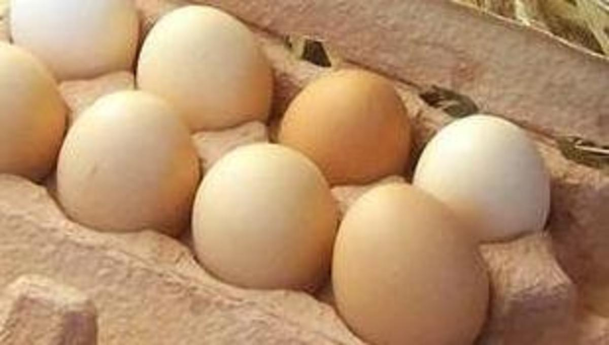 How to Check if an Egg is Fresh.  Source: Wikimedia