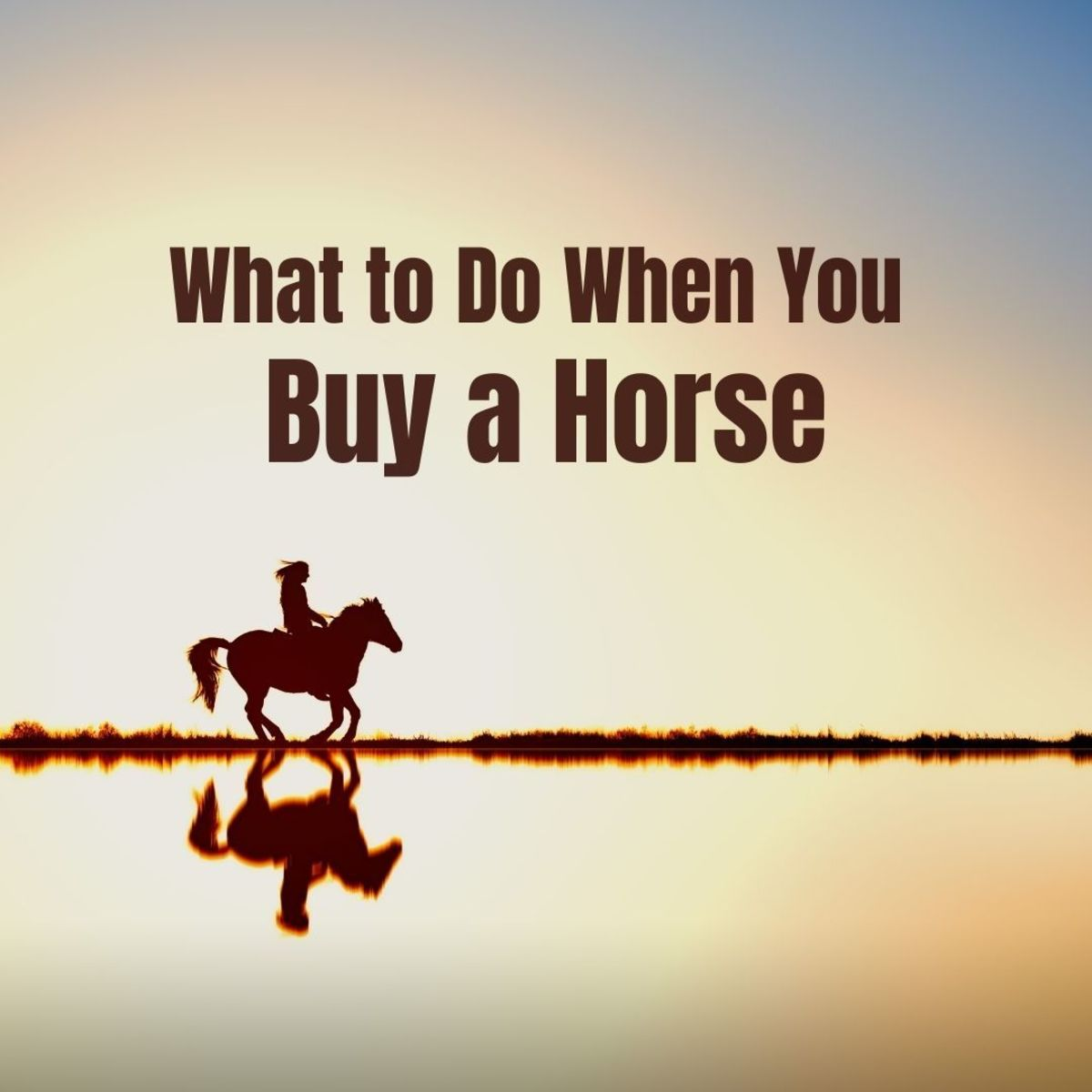 A guide to buying a horse
