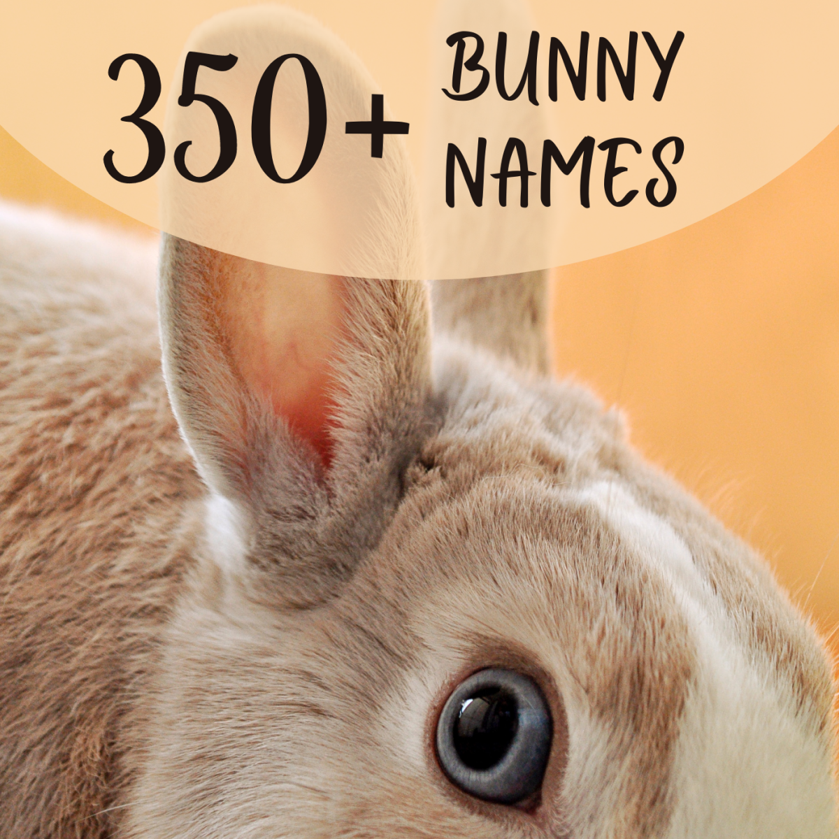 Do you have a new baby rabbit or full-grown bunny, or are you thinking of getting one? Either way, you'll need a name! Find some of the cutest and funniest bunny names here.