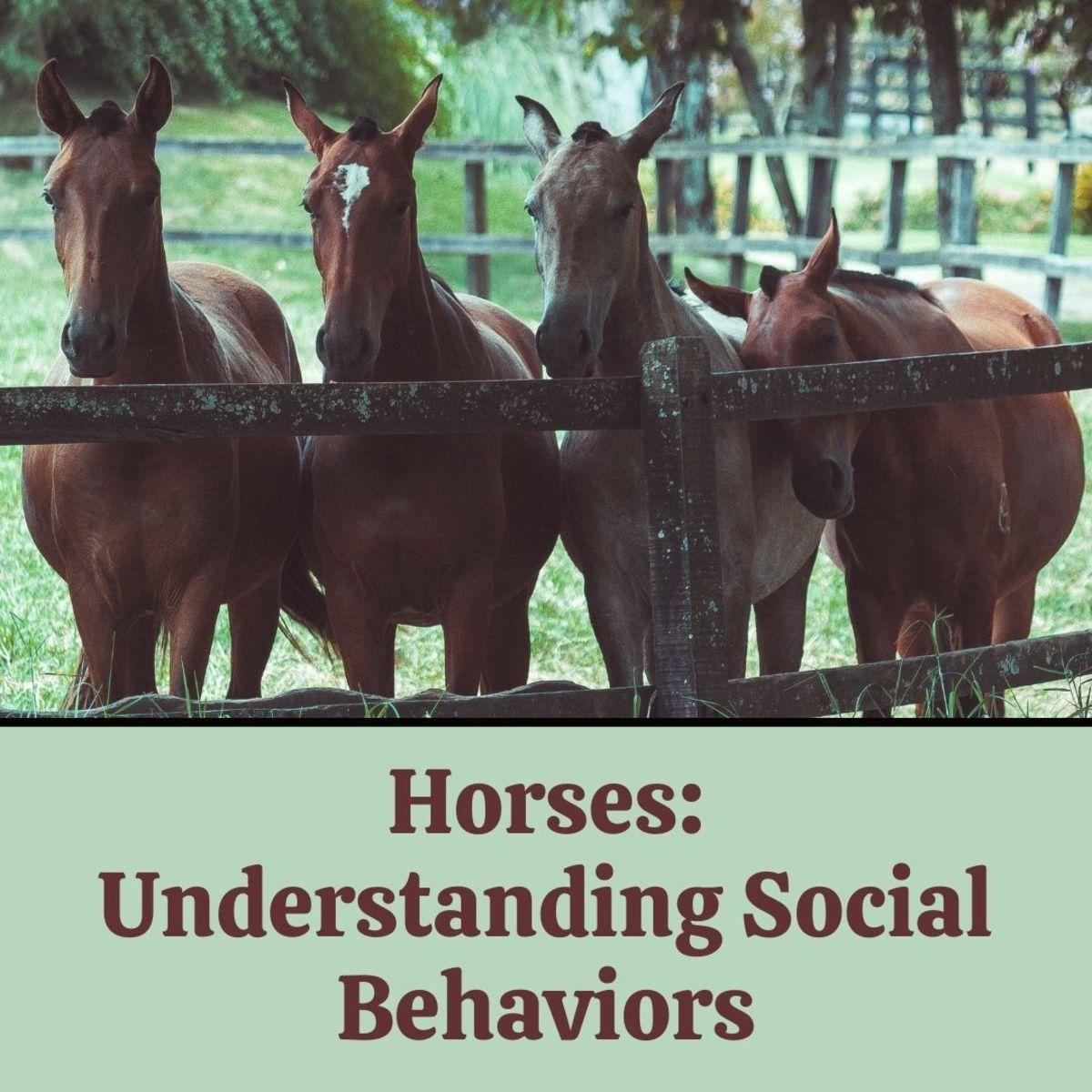 Social Behaviors of Wild and Domestic Horses