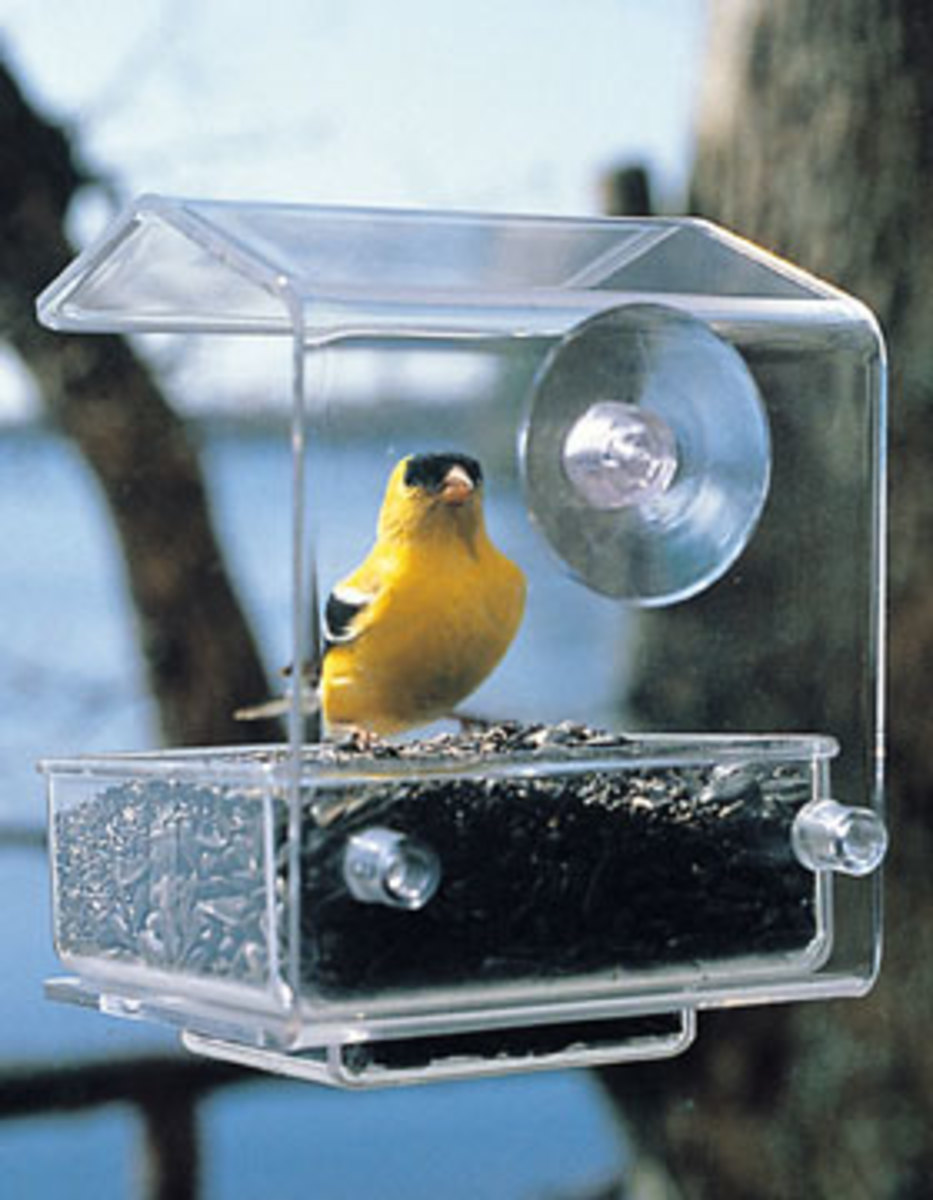 A window feeder allows you to see the birds feeding up close.
