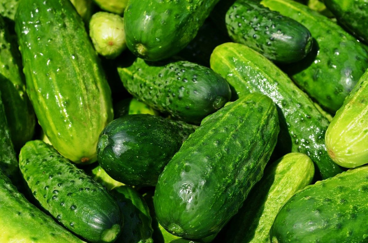 nutritional-benefits-of-cucumbers