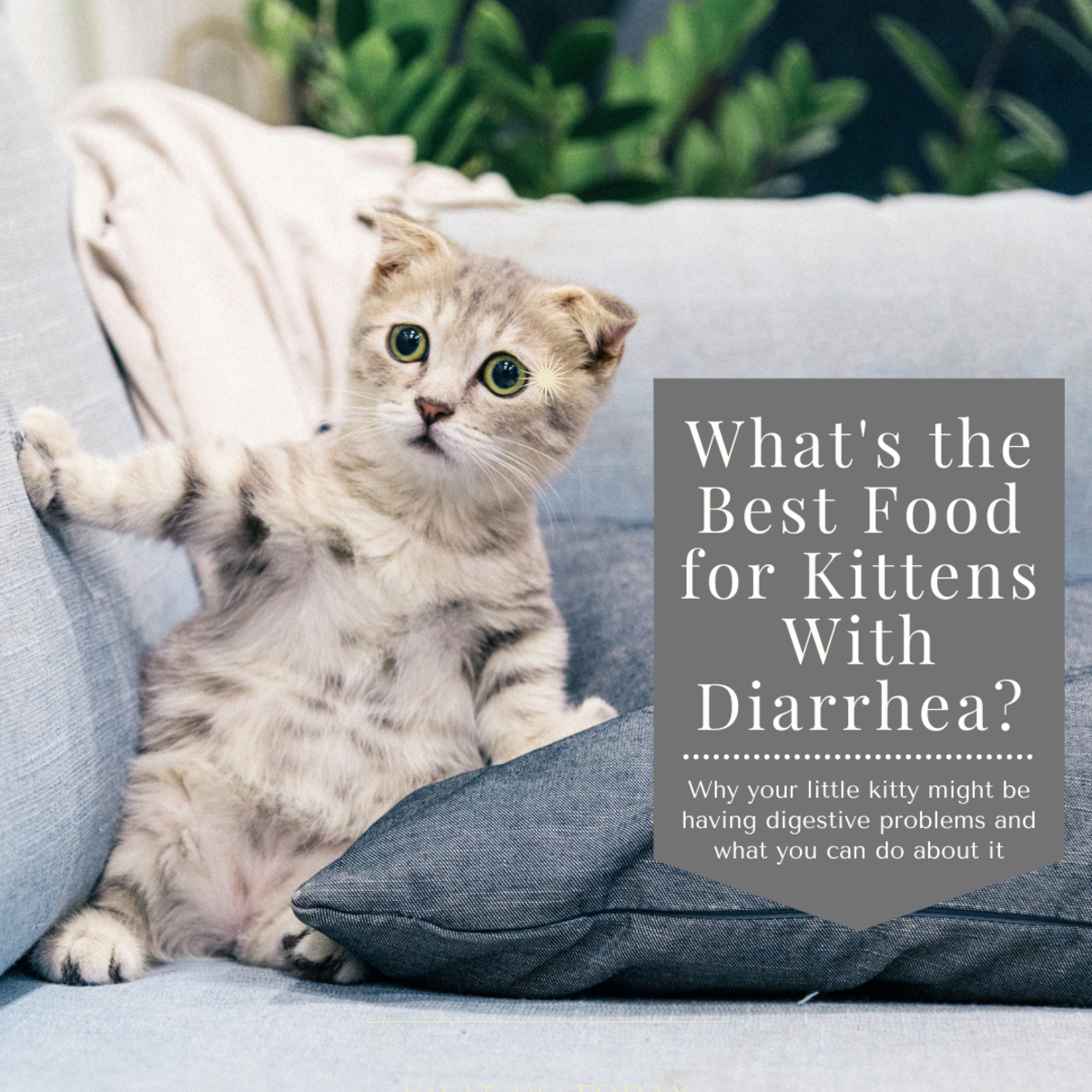 This guide will help you find out why your kitten might be having diarrhea and how you can help their digestive system get back on track.