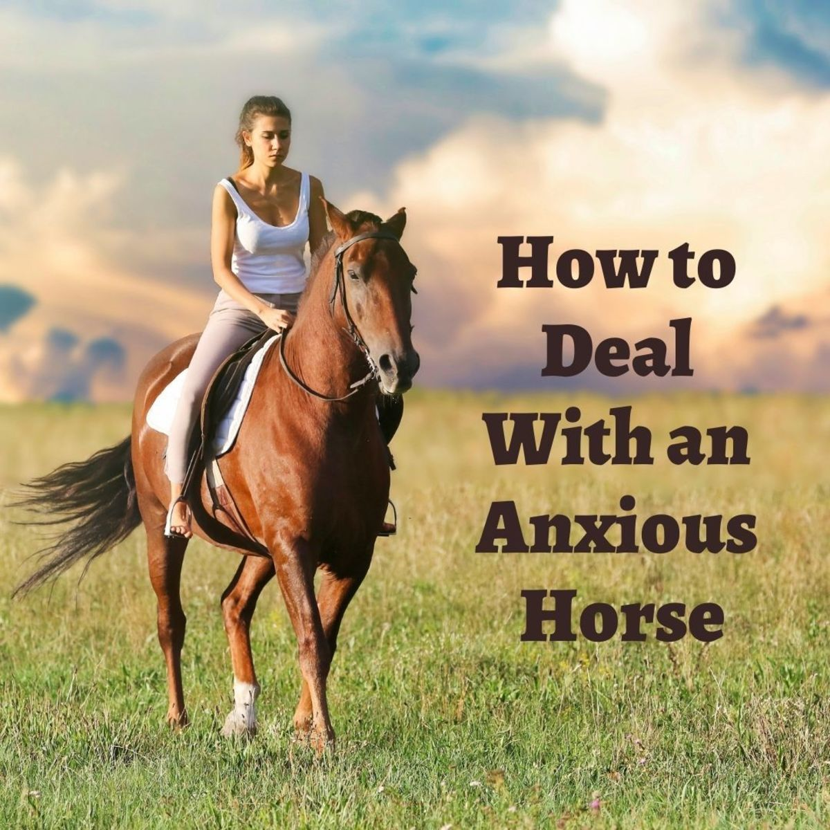 How to deal with anxious and nervous horses