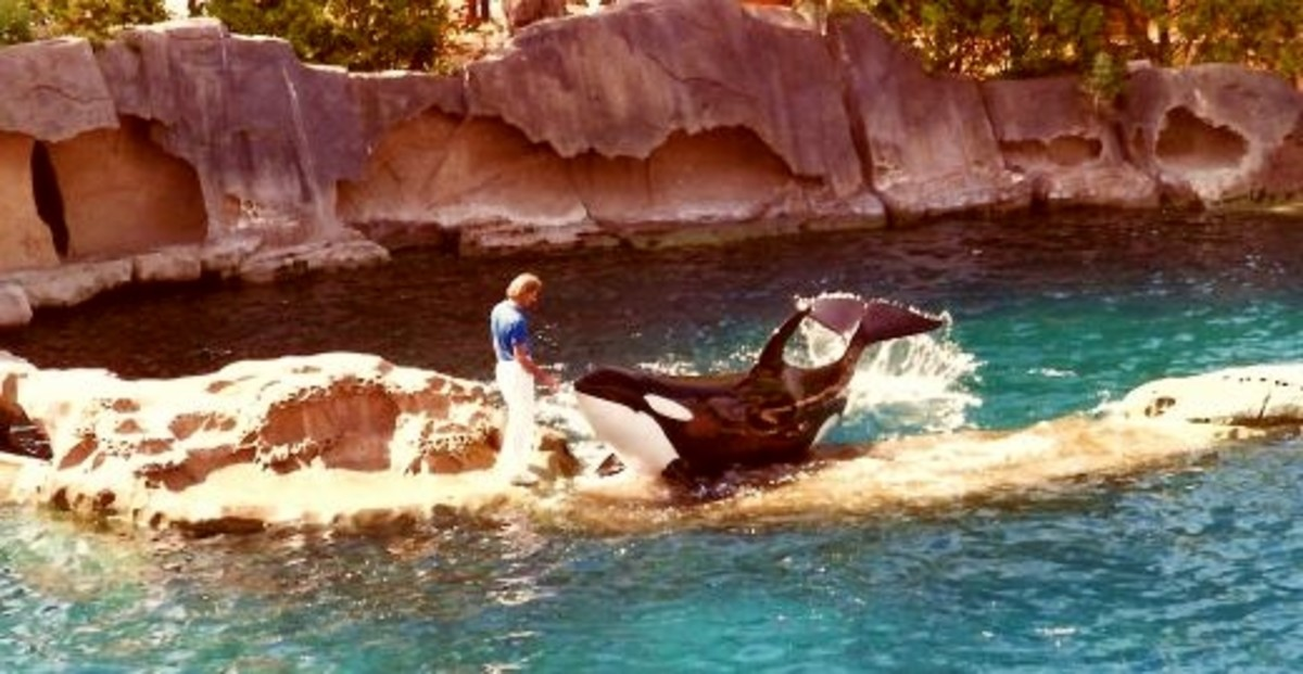 Killer Whale show at Vancouver's Aquarium