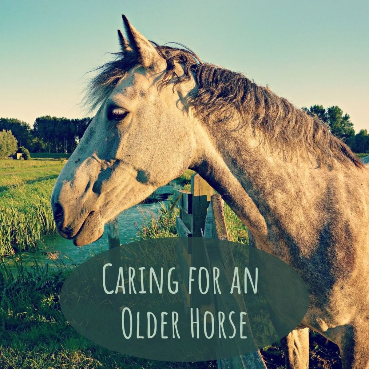 Older horses may need special care—here are five tips for caring for senior horses.