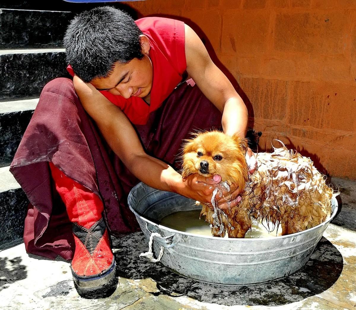Washing a dog