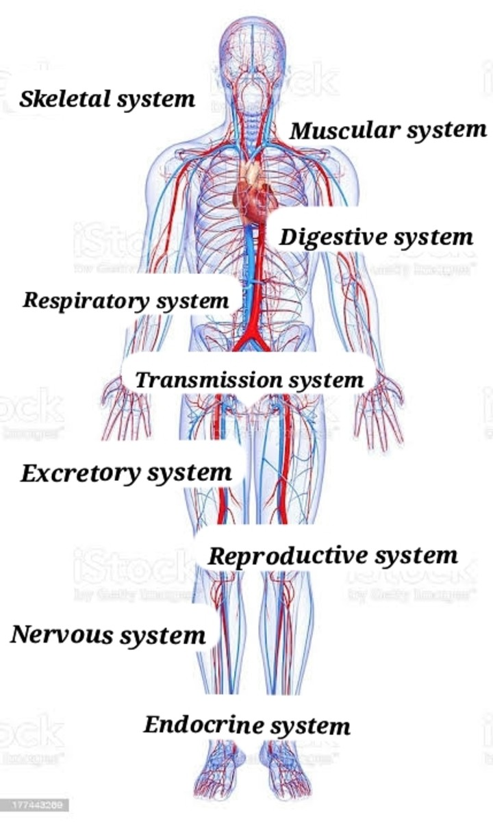 our-body-structure