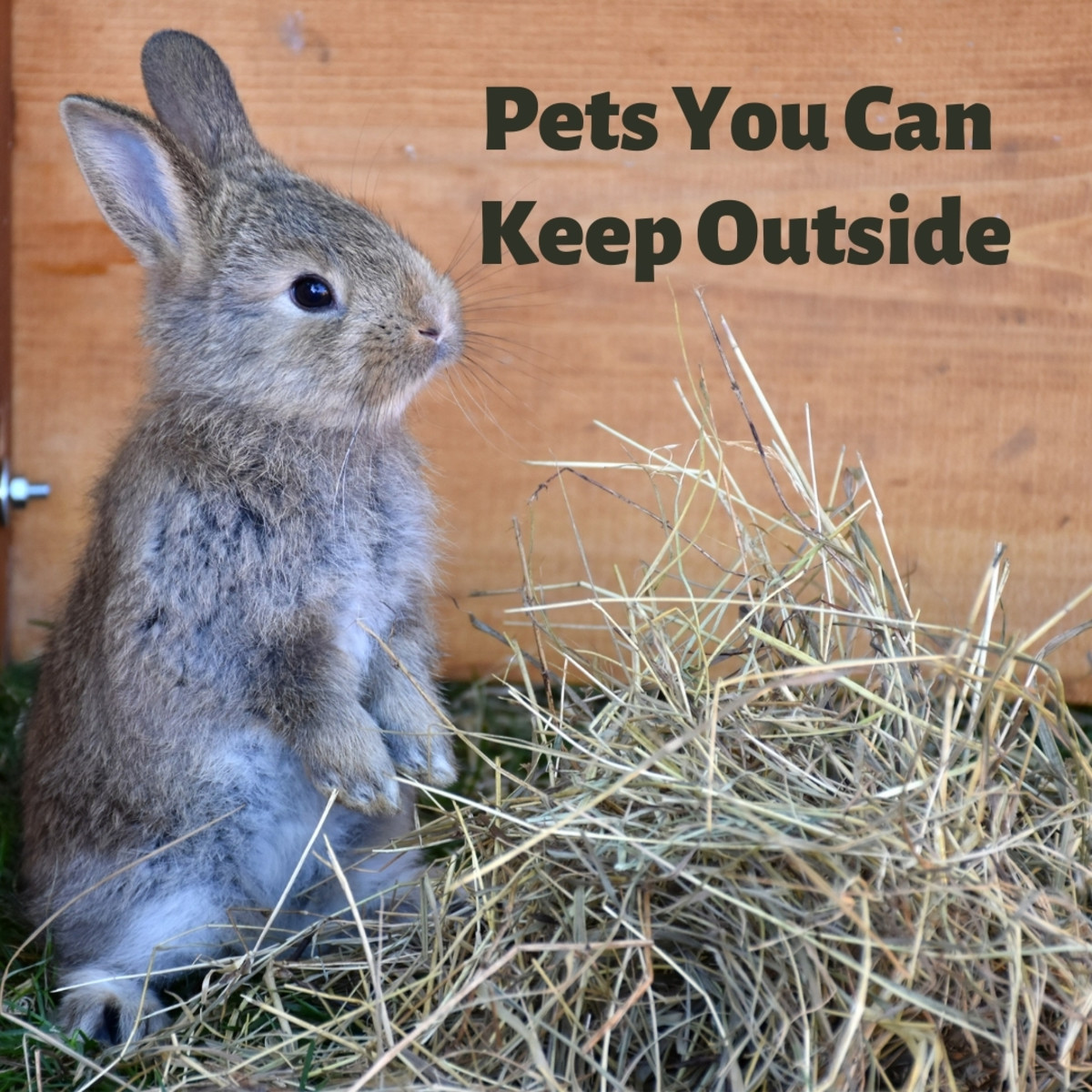 There are plenty of low-maintenance pets that can be kept outdoors—read about them here!