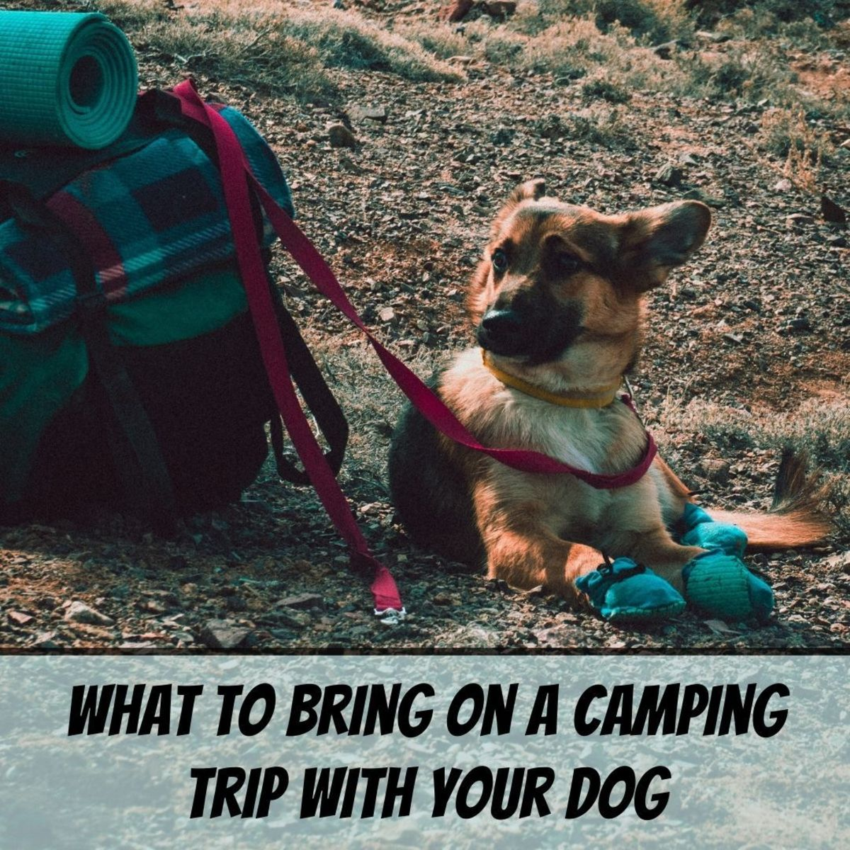 Dogs are ideal companions for camping trips—here's what to bring with you to be prepared and comfortable.