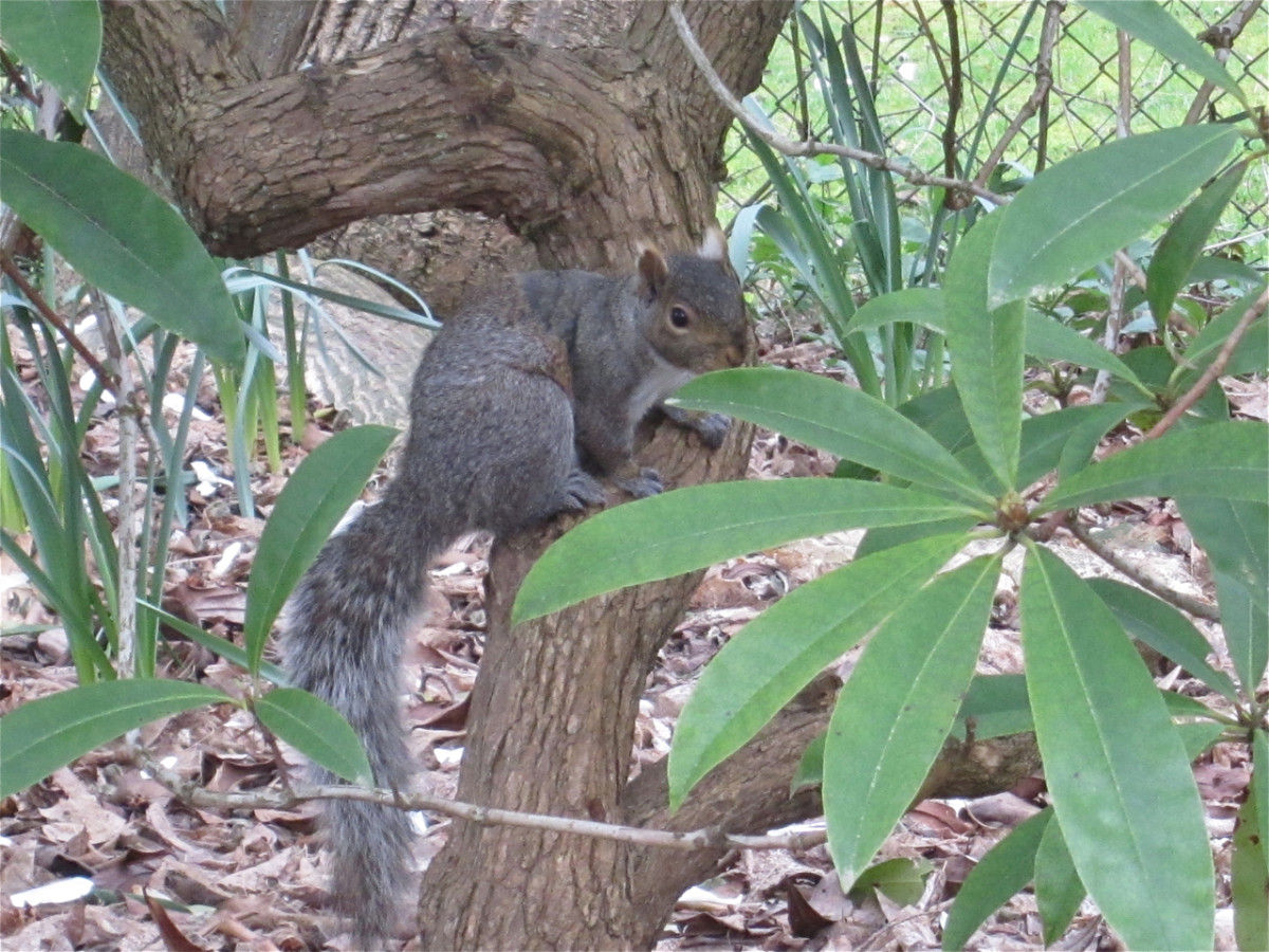 A curious squirrel watches the race