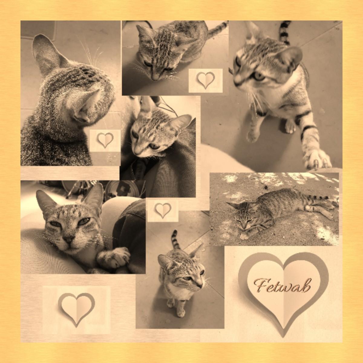 FETWAB the Kitty - A Poem